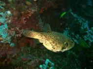 Asisbiz Philippines Cebu Moal Boal 20051227 Dive 1 Pescador Island 53