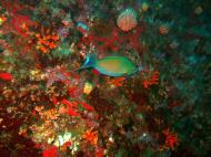 Asisbiz Philippines Cebu Moal Boal 20051227 Dive 1 Pescador Island 54