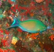 Asisbiz Philippines Cebu Moal Boal 20051227 Dive 1 Pescador Island 55