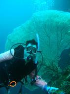 Asisbiz Philippines Cebu Moal Boal 20051227 Dive 1 Pescador Island 59