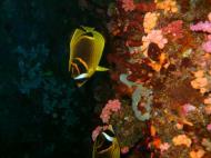 Asisbiz Philippines Cebu Moal Boal 20051227 Dive 1 Pescador Island 62