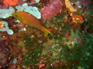 Asisbiz Philippines Cebu Moal Boal 20051227 Dive 1 Pescador Island 63
