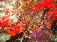 Asisbiz Philippines Cebu Moal Boal 20051228 Dive 1 Pescador Island 05