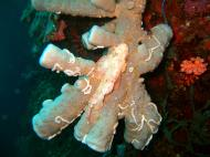 Asisbiz Philippines Cebu Moal Boal 20051228 Dive 1 Pescador Island 06