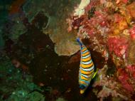 Philippines Cebu Moal Boal 20051228 Dive 1 Pescador Island 10