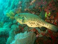 Asisbiz Philippines Cebu Moal Boal 20051228 Dive 1 Pescador Island 11