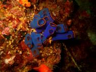 Asisbiz Philippines Cebu Moal Boal 20051228 Dive 2 Dolphin House 03