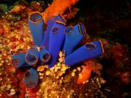 Asisbiz Philippines Cebu Moal Boal 20051228 Dive 2 Dolphin House 04