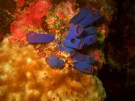 Asisbiz Philippines Cebu Moal Boal 20051228 Dive 2 Dolphin House 18