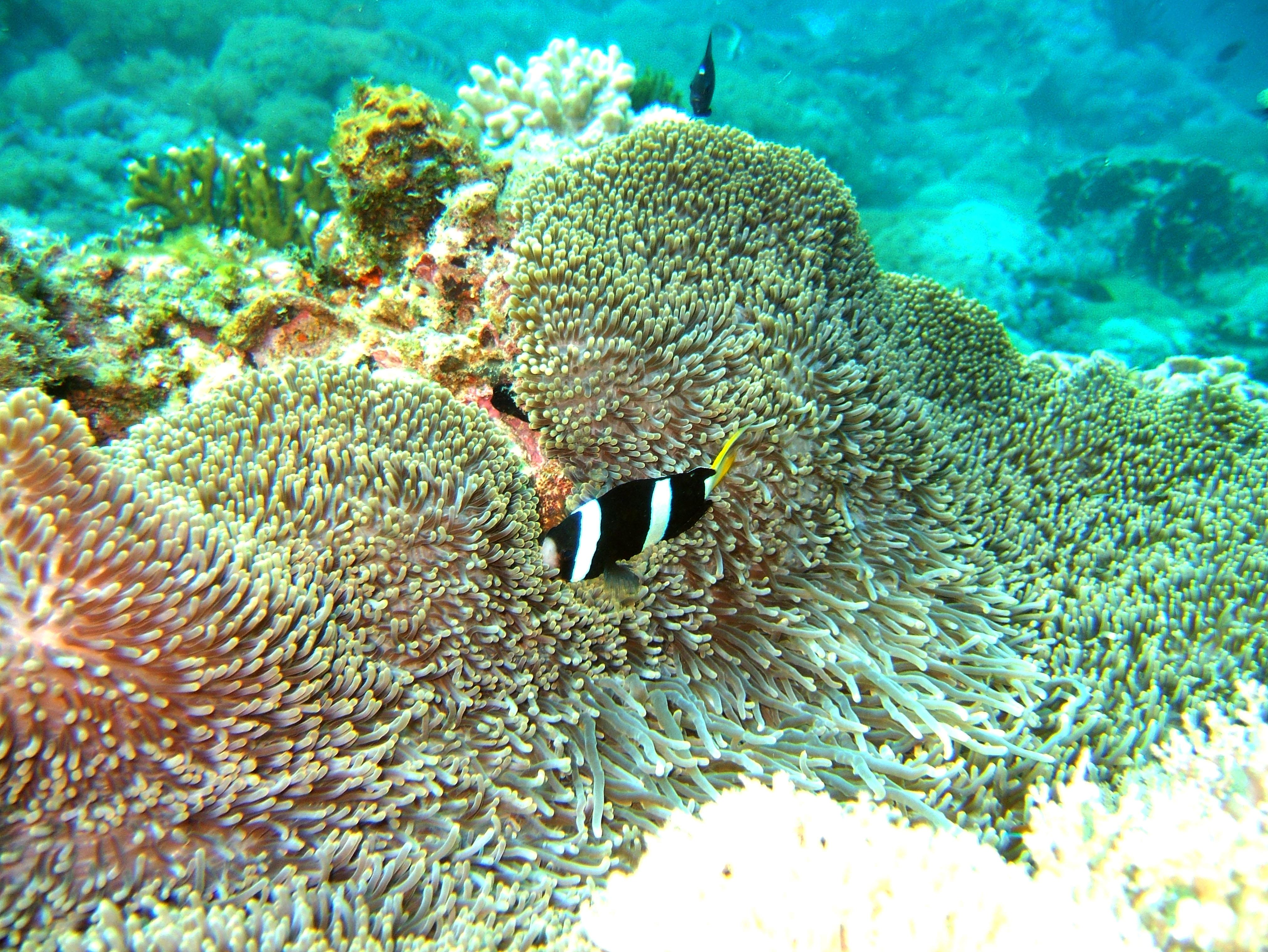 Dive 15 Philippines Mindoro Sabang West Escarceo Nov 2005 18