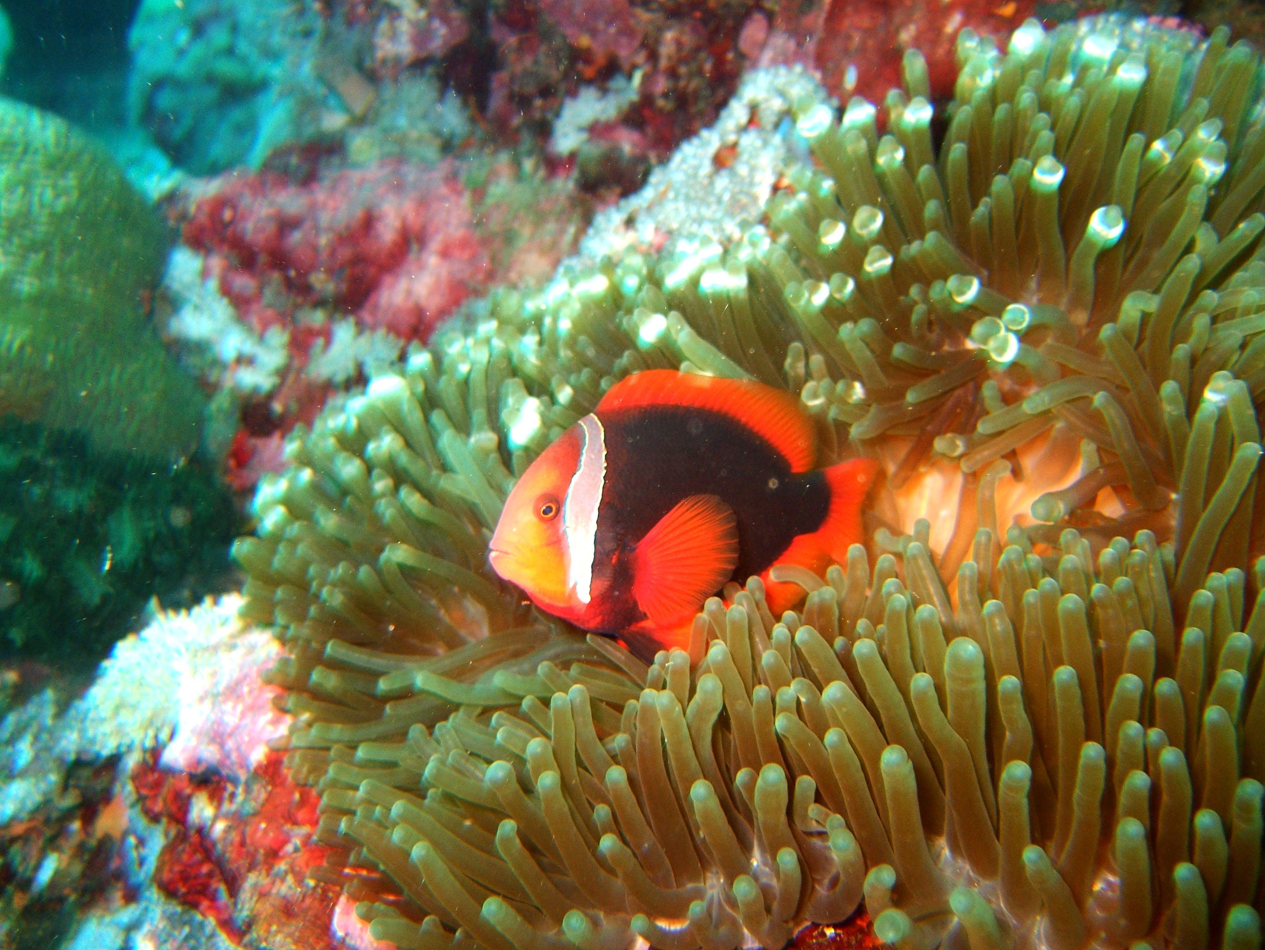 Dive 15 Philippines Mindoro Sabang West Escarceo Nov 2005 27