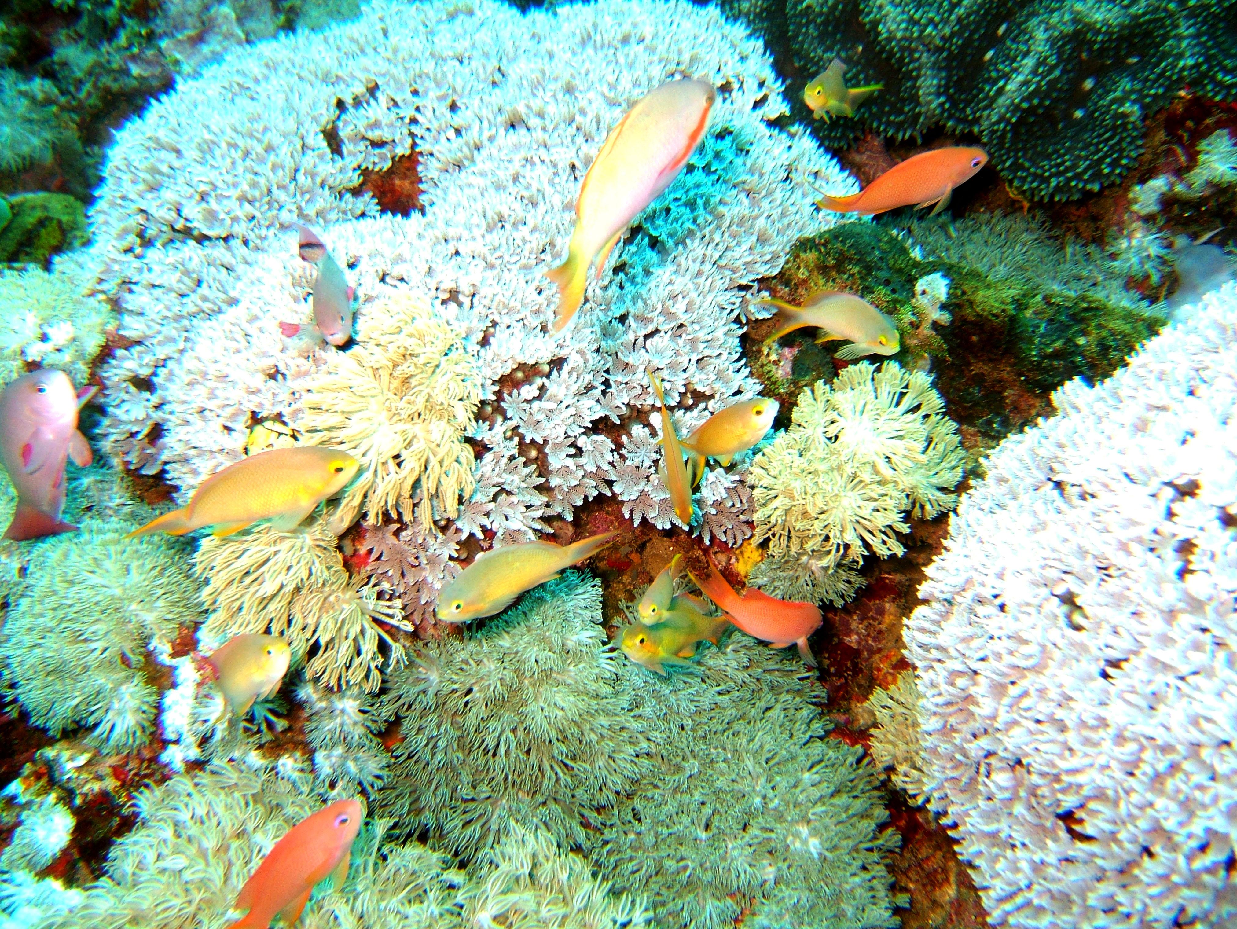 Dive 15 Philippines Mindoro Sabang West Escarceo Nov 2005 28