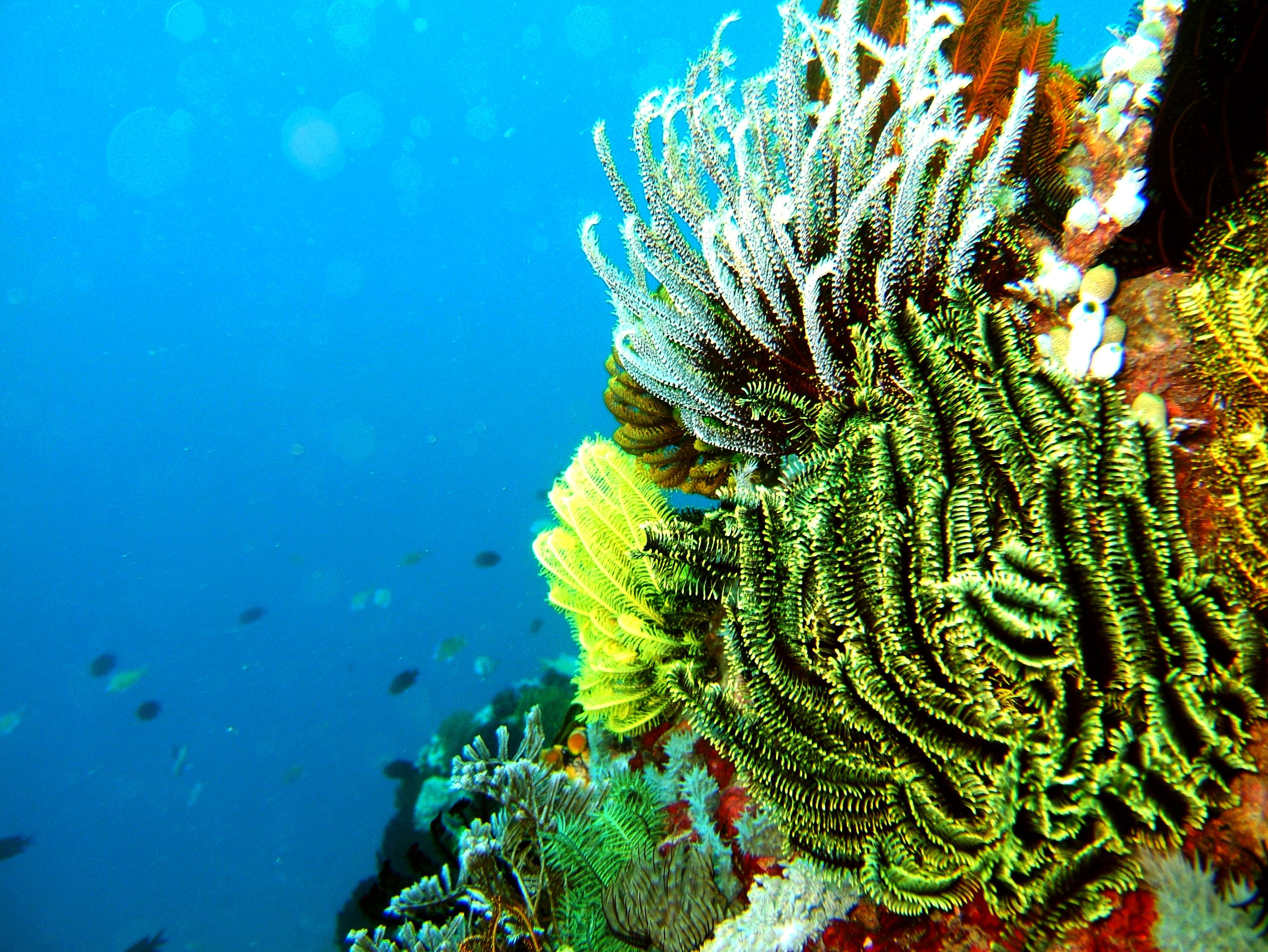 Dive 15 Philippines Mindoro Sabang West Escarceo Nov 2005 30