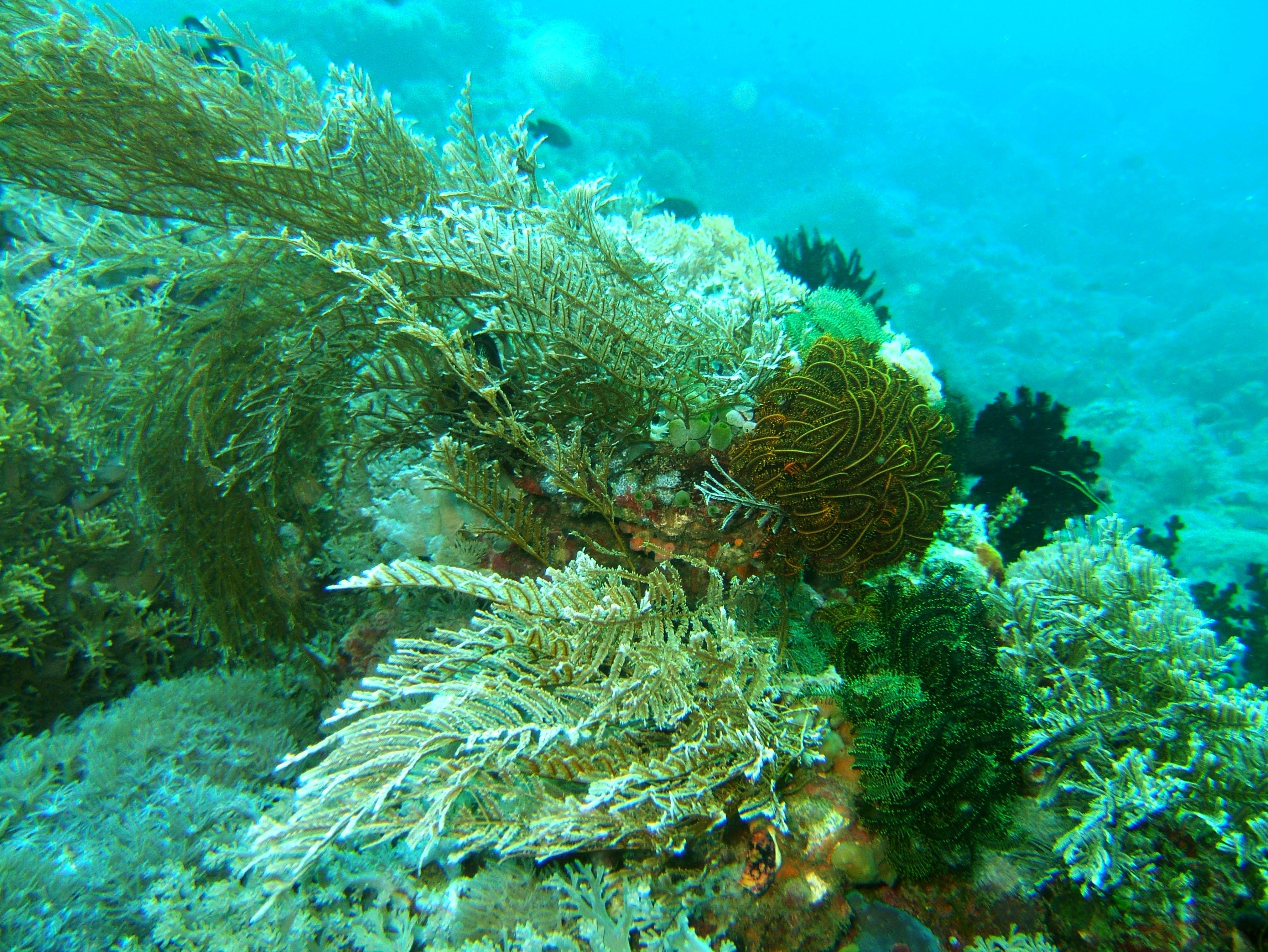 Dive 15 Philippines Mindoro Sabang West Escarceo Nov 2005 33