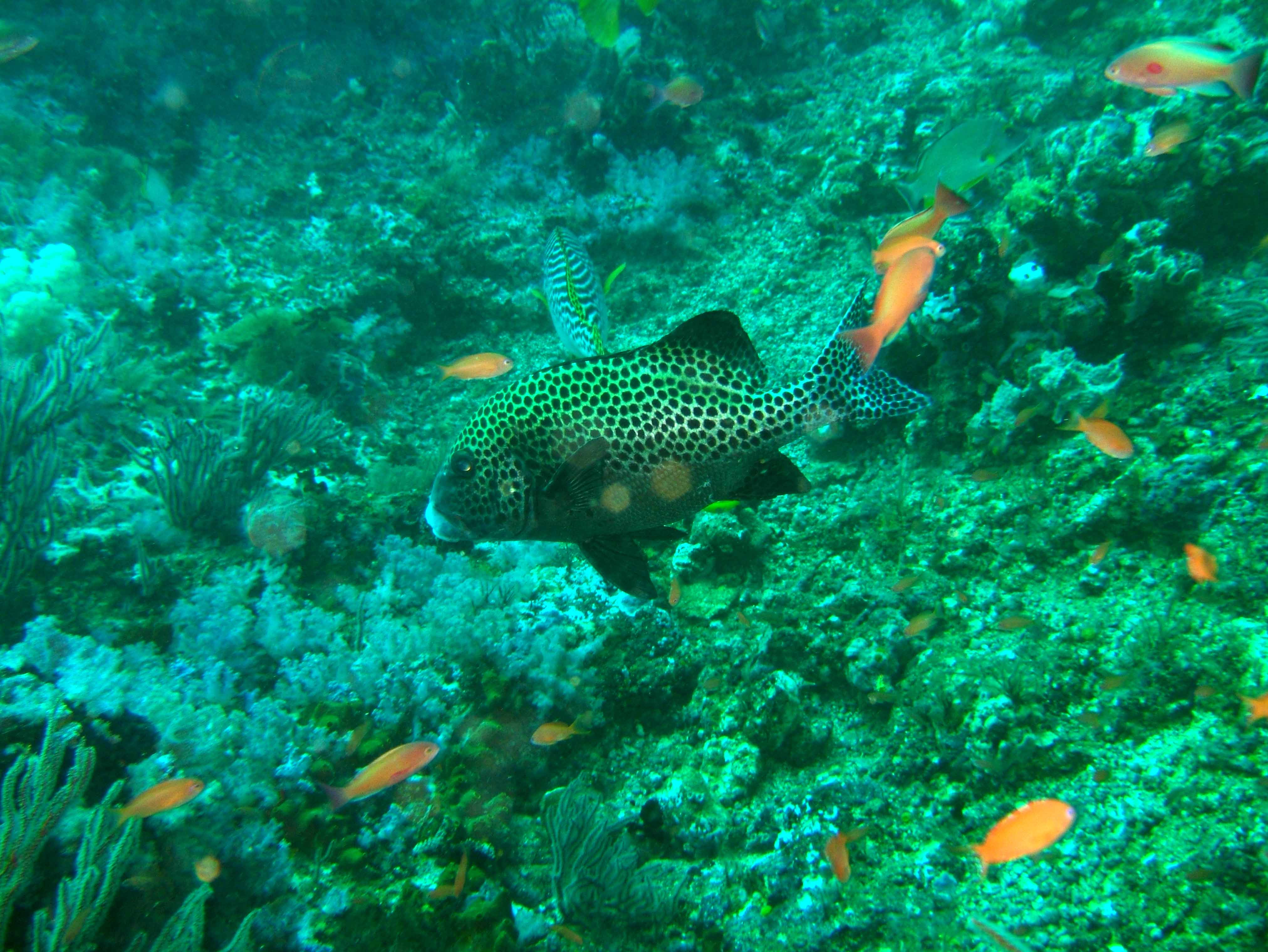 Dive 16 Philippines Mindoro Sabang hole in the wall Mar 2006 10
