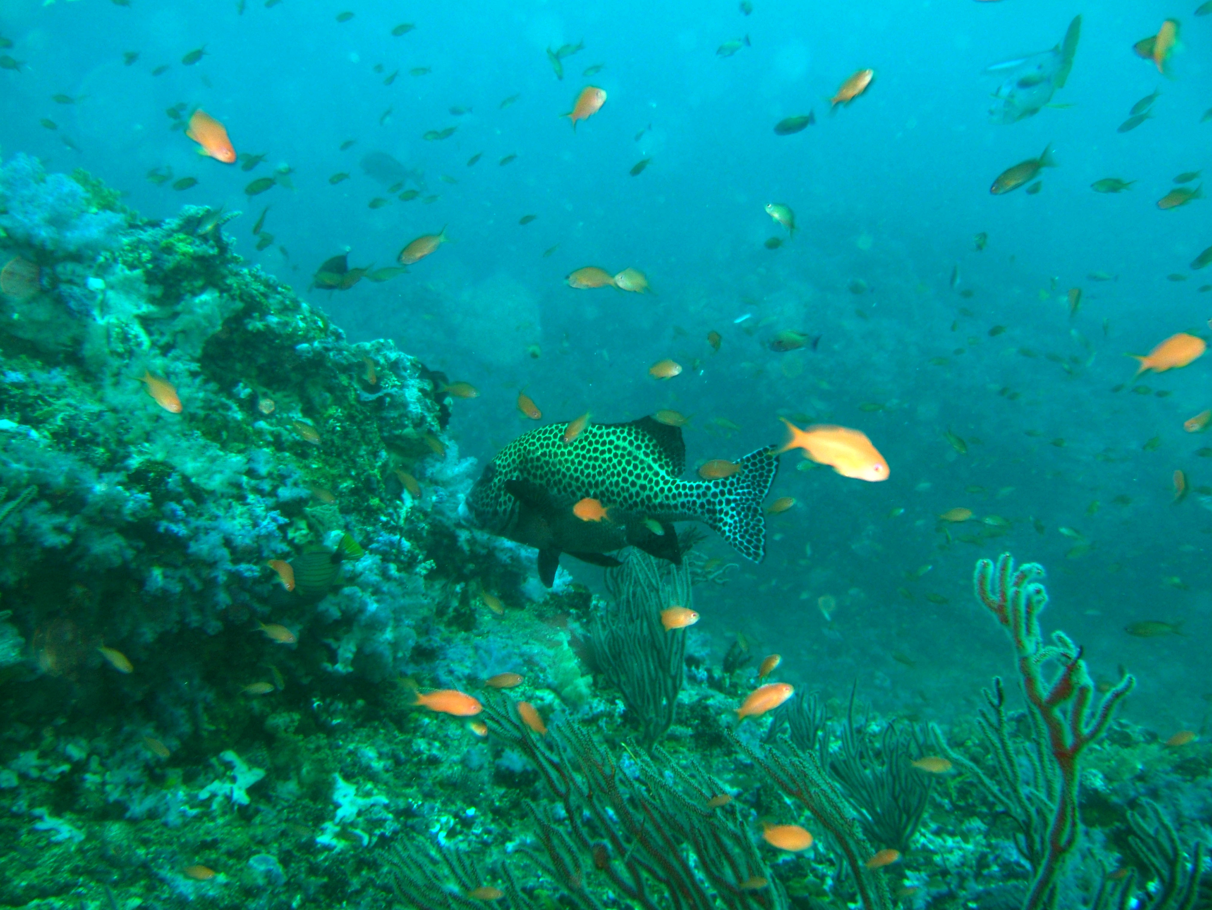 Dive 16 Philippines Mindoro Sabang hole in the wall Mar 2006 15