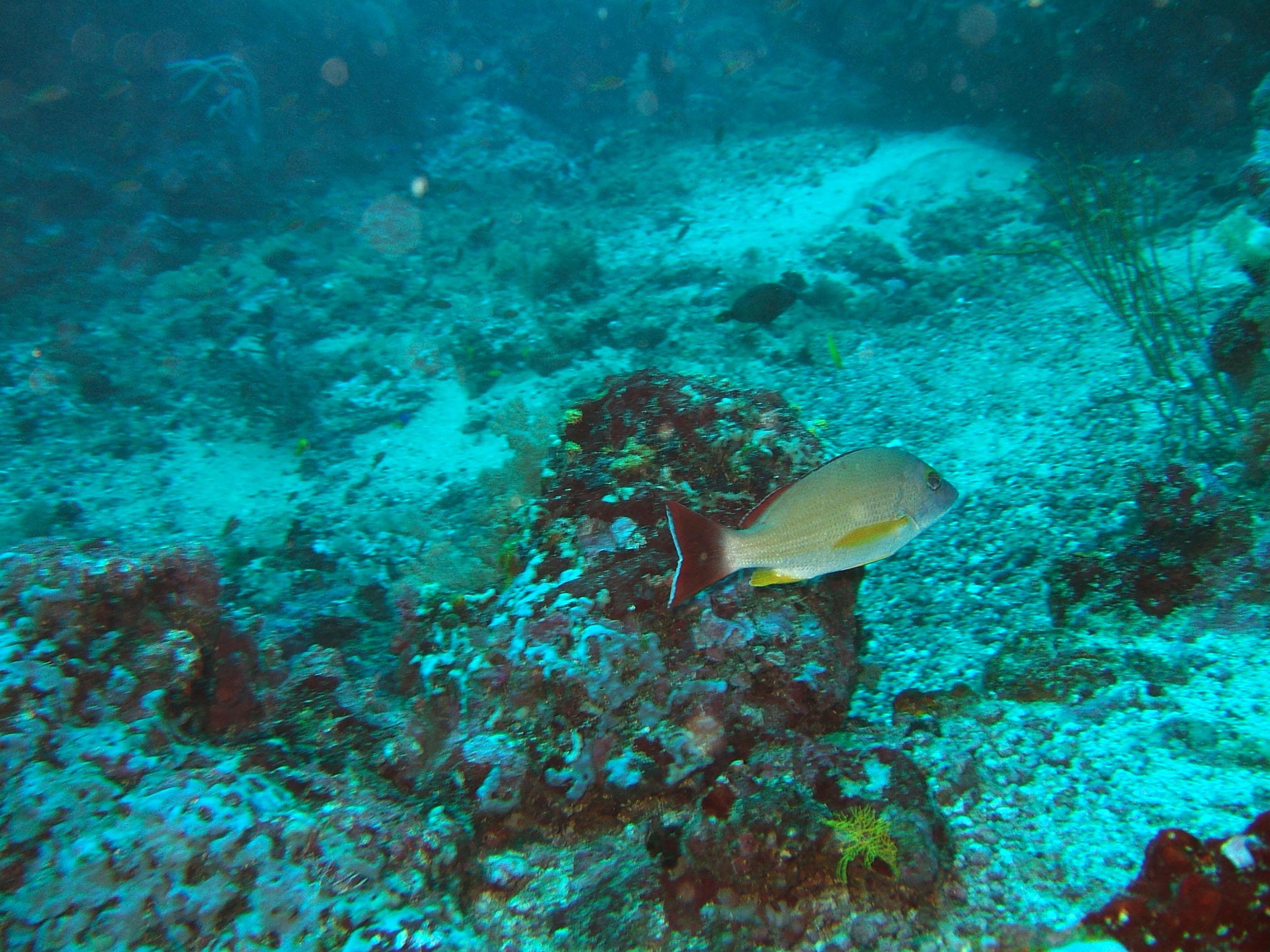 Dive 17 Philippines Mindoro Sabang Fish Bowl Oct 2005 01
