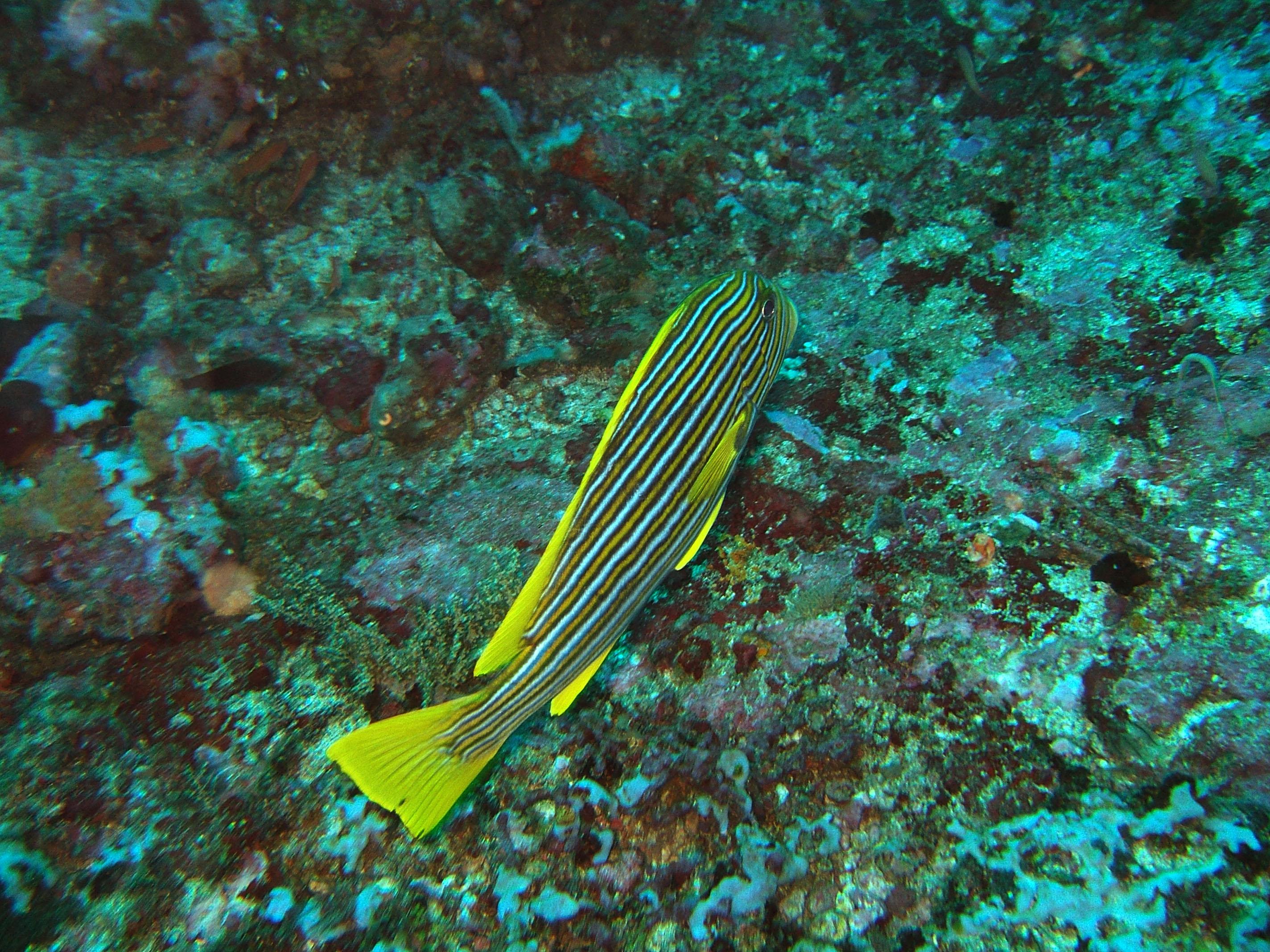 Dive 17 Philippines Mindoro Sabang Fish Bowl Oct 2005 02