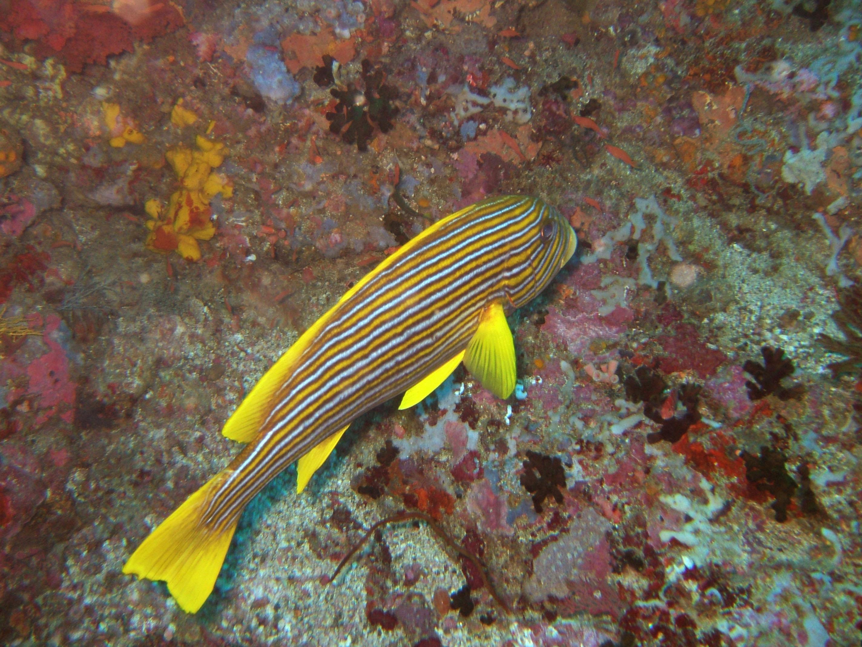 Dive 17 Philippines Mindoro Sabang Fish Bowl Oct 2005 03