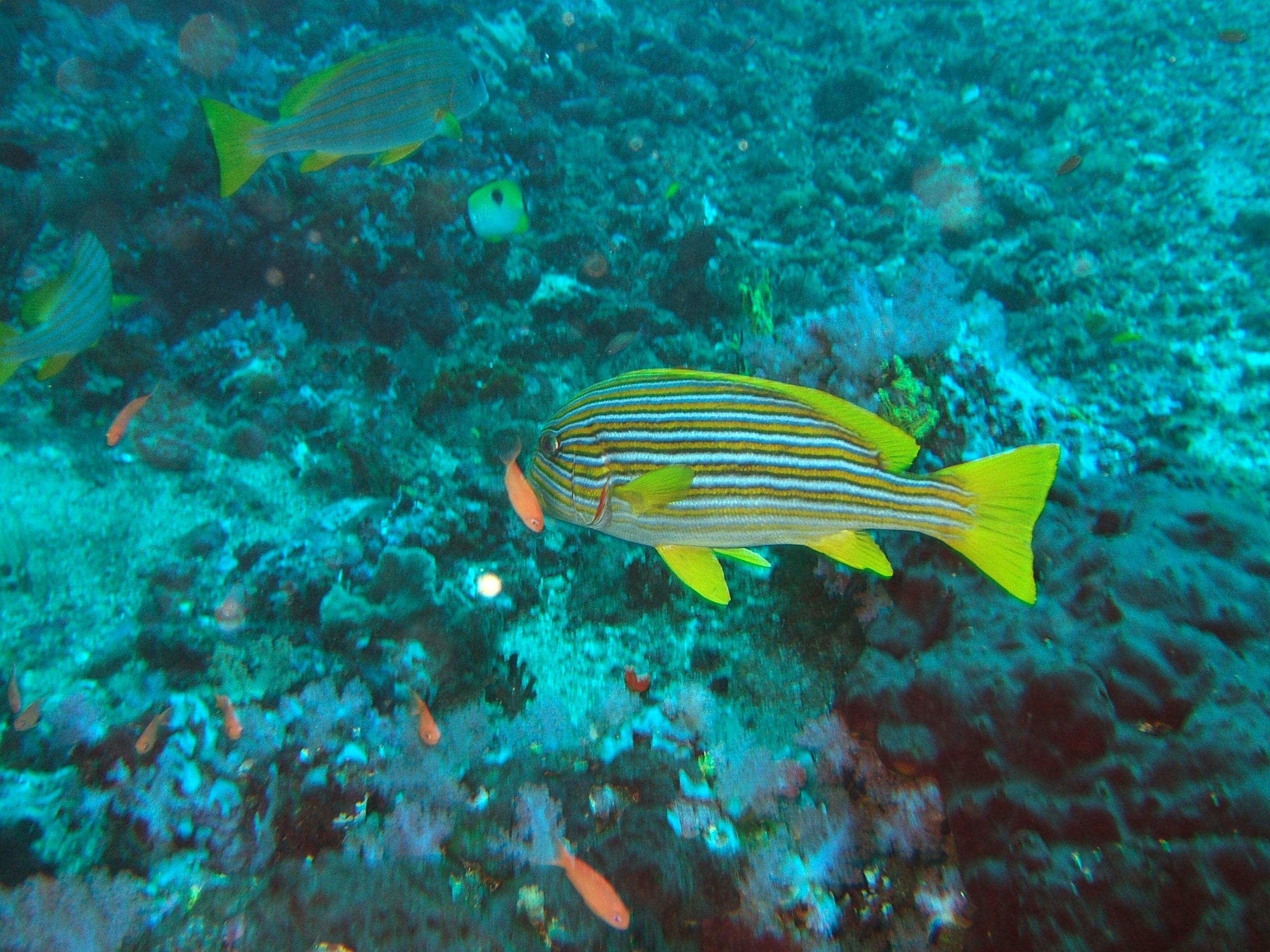 Dive 17 Philippines Mindoro Sabang Fish Bowl Oct 2005 04