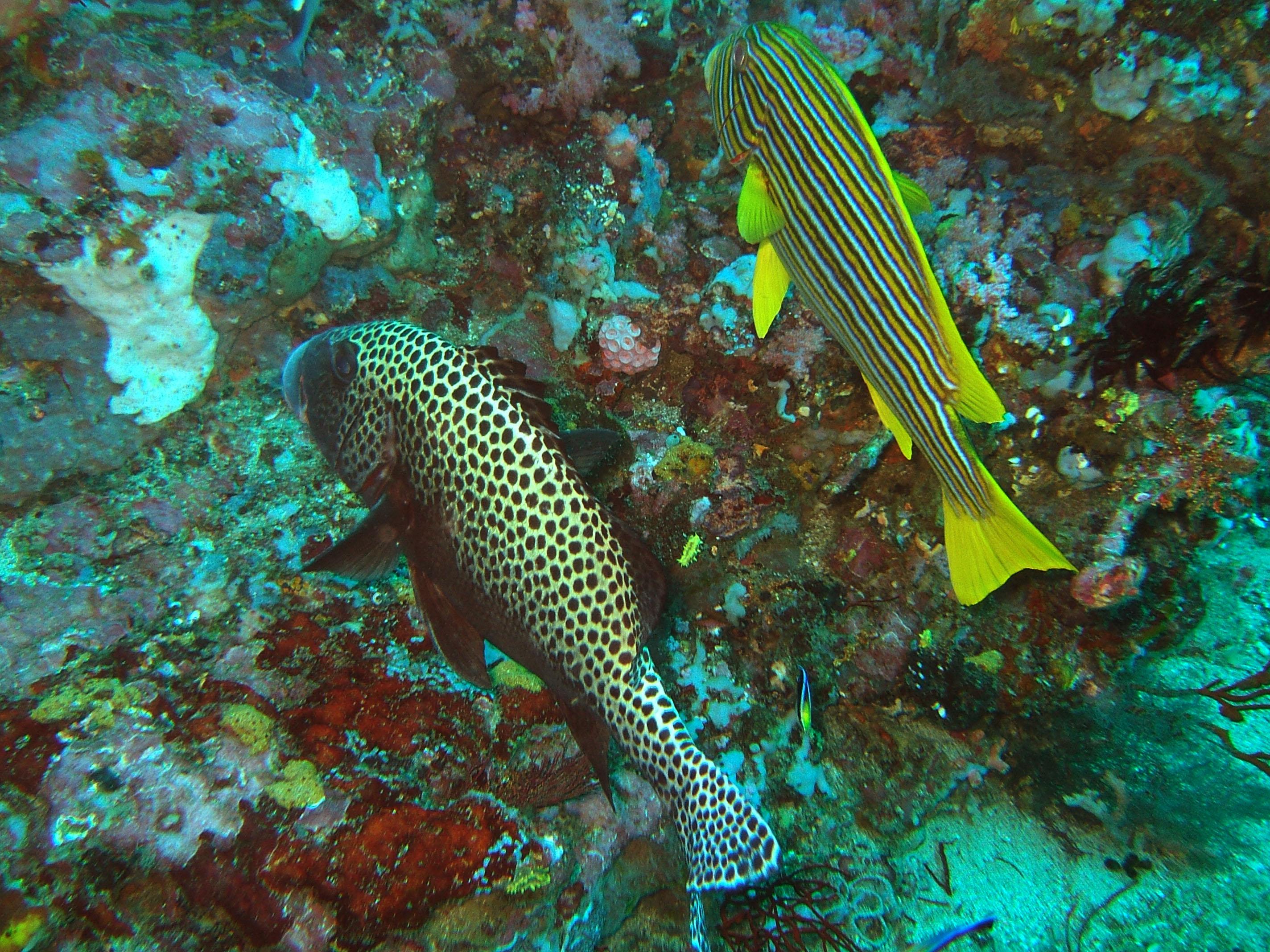 Dive 17 Philippines Mindoro Sabang Fish Bowl Oct 2005 05
