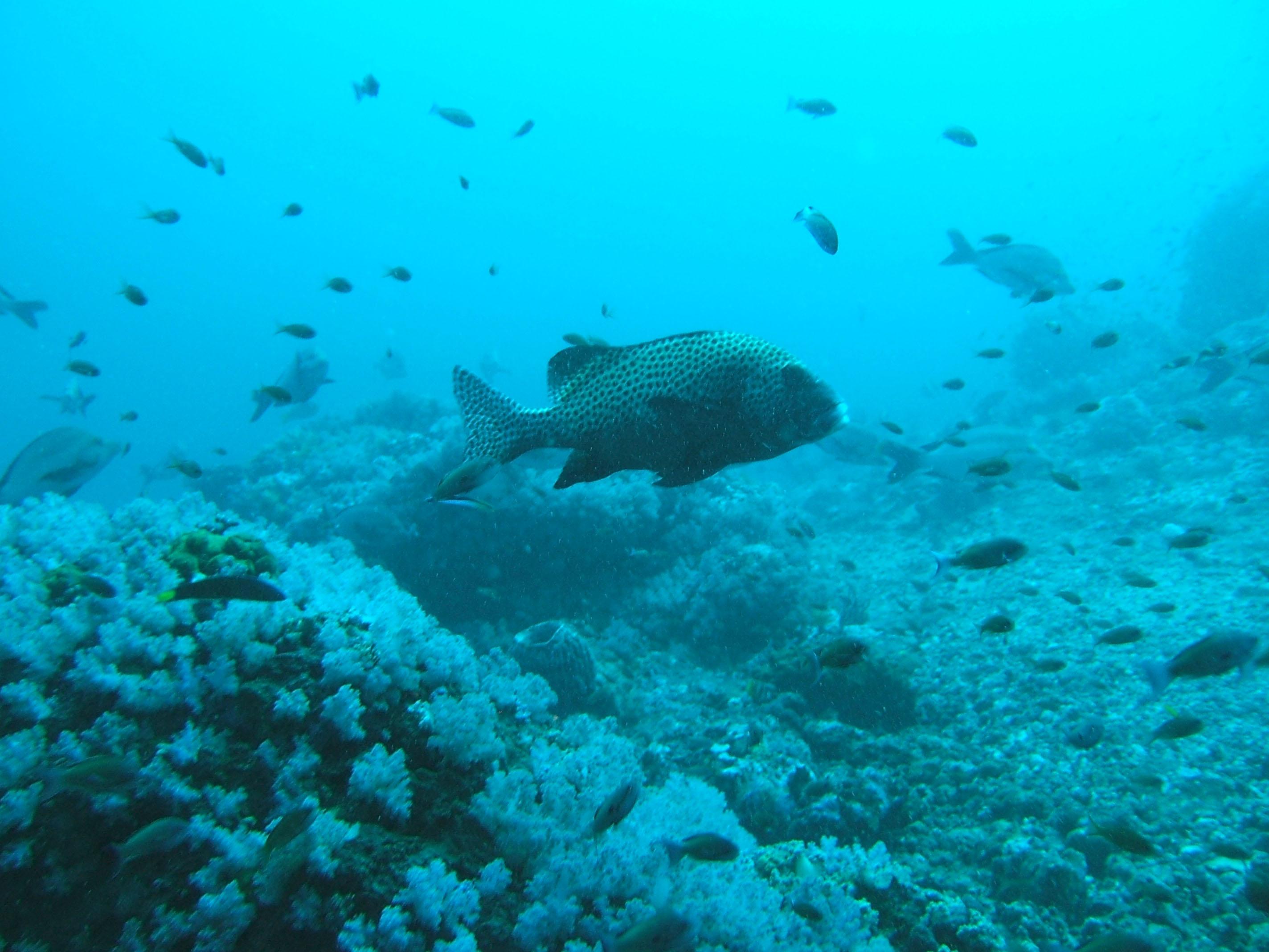 Dive 17 Philippines Mindoro Sabang Fish Bowl Oct 2005 08