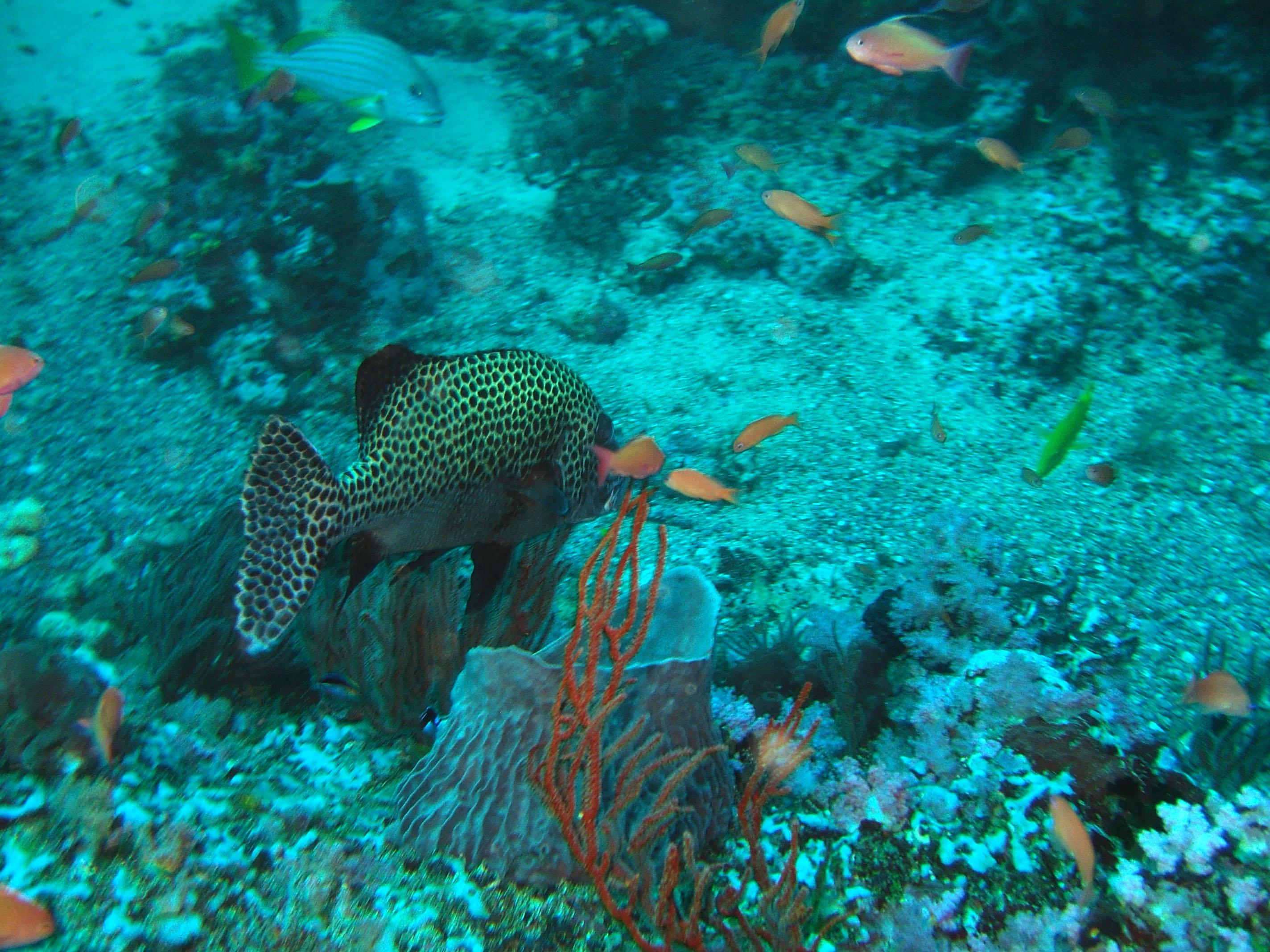 Dive 17 Philippines Mindoro Sabang Fish Bowl Oct 2005 09