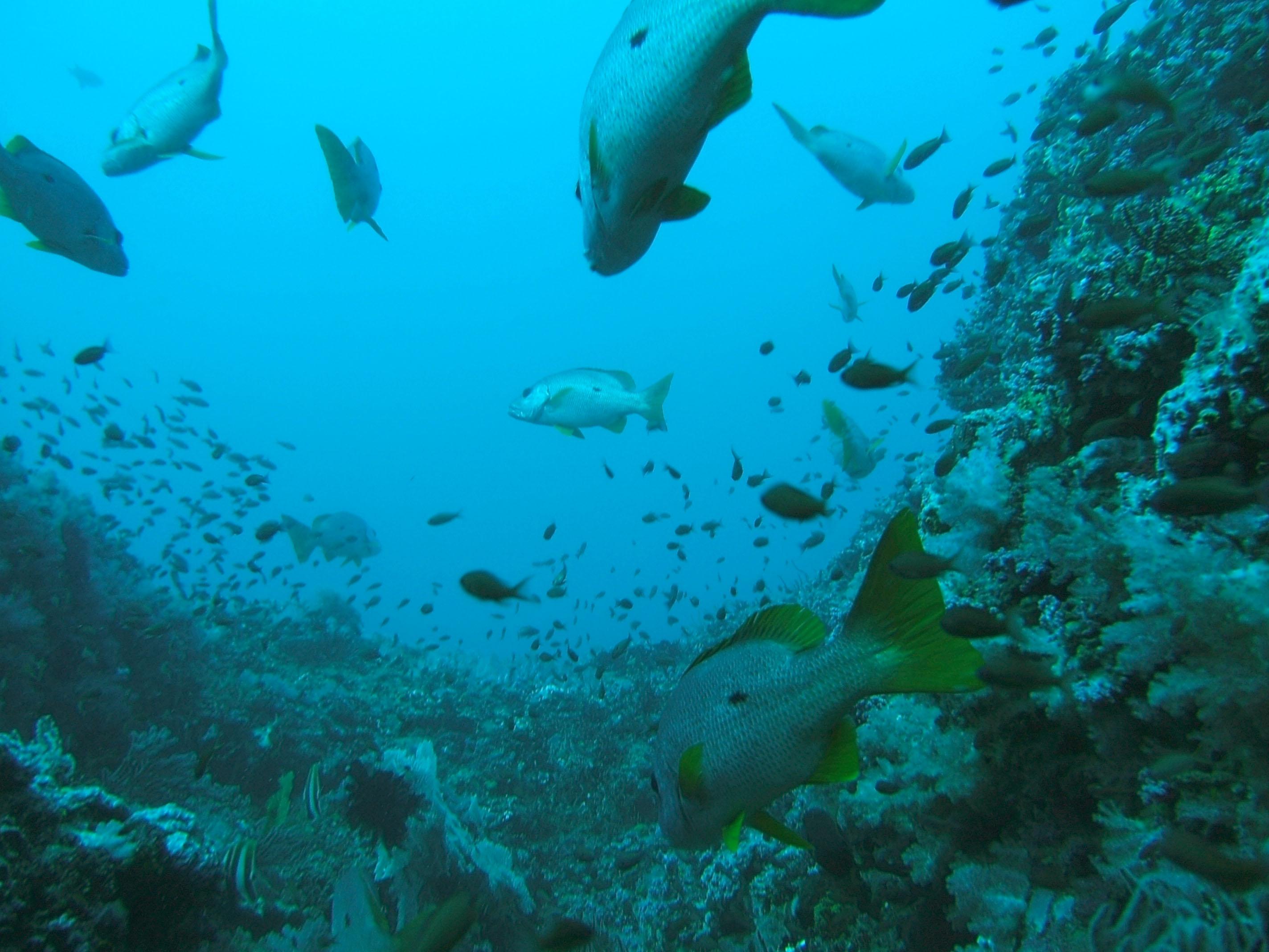 Dive 17 Philippines Mindoro Sabang Fish Bowl Oct 2005 12