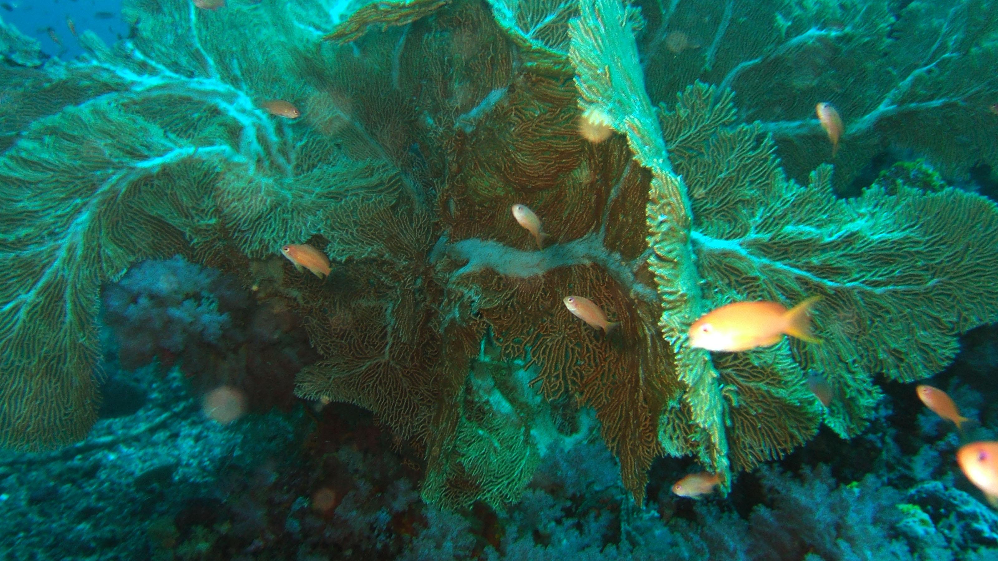 Dive 17 Philippines Mindoro Sabang Fish Bowl Oct 2005 15