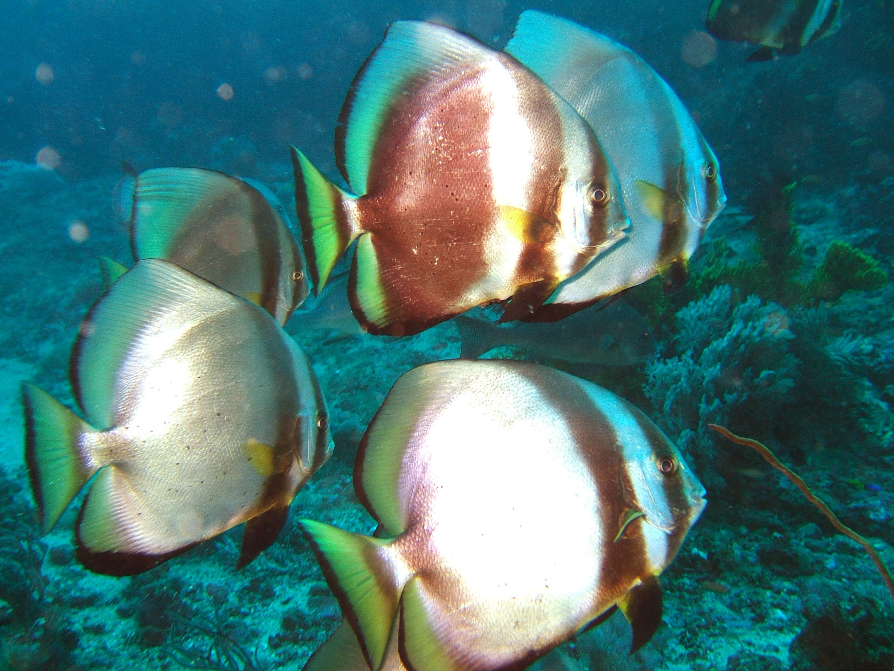 Dive 17 Philippines Mindoro Sabang Fish Bowl Oct 2005 20
