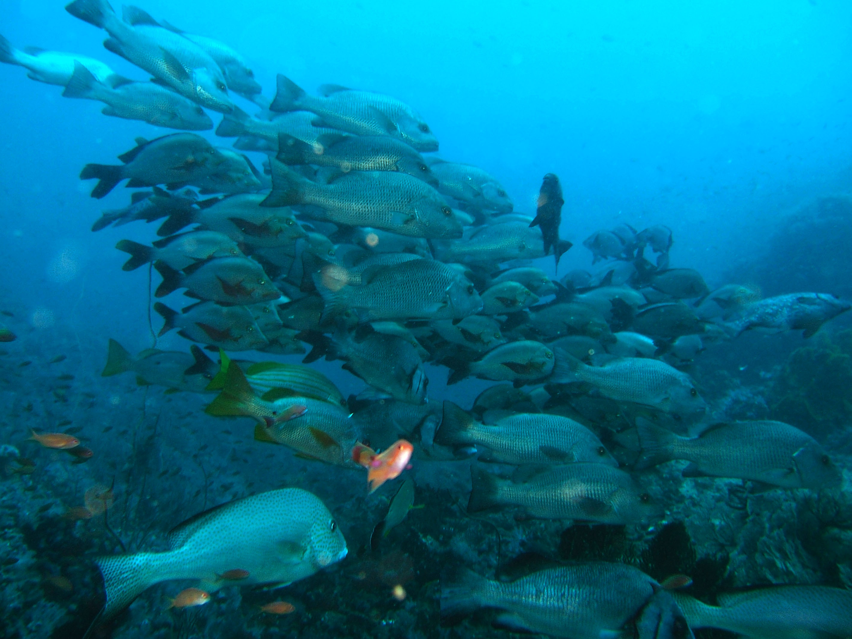 Dive 17 Philippines Mindoro Sabang Fish Bowl Oct 2005 21
