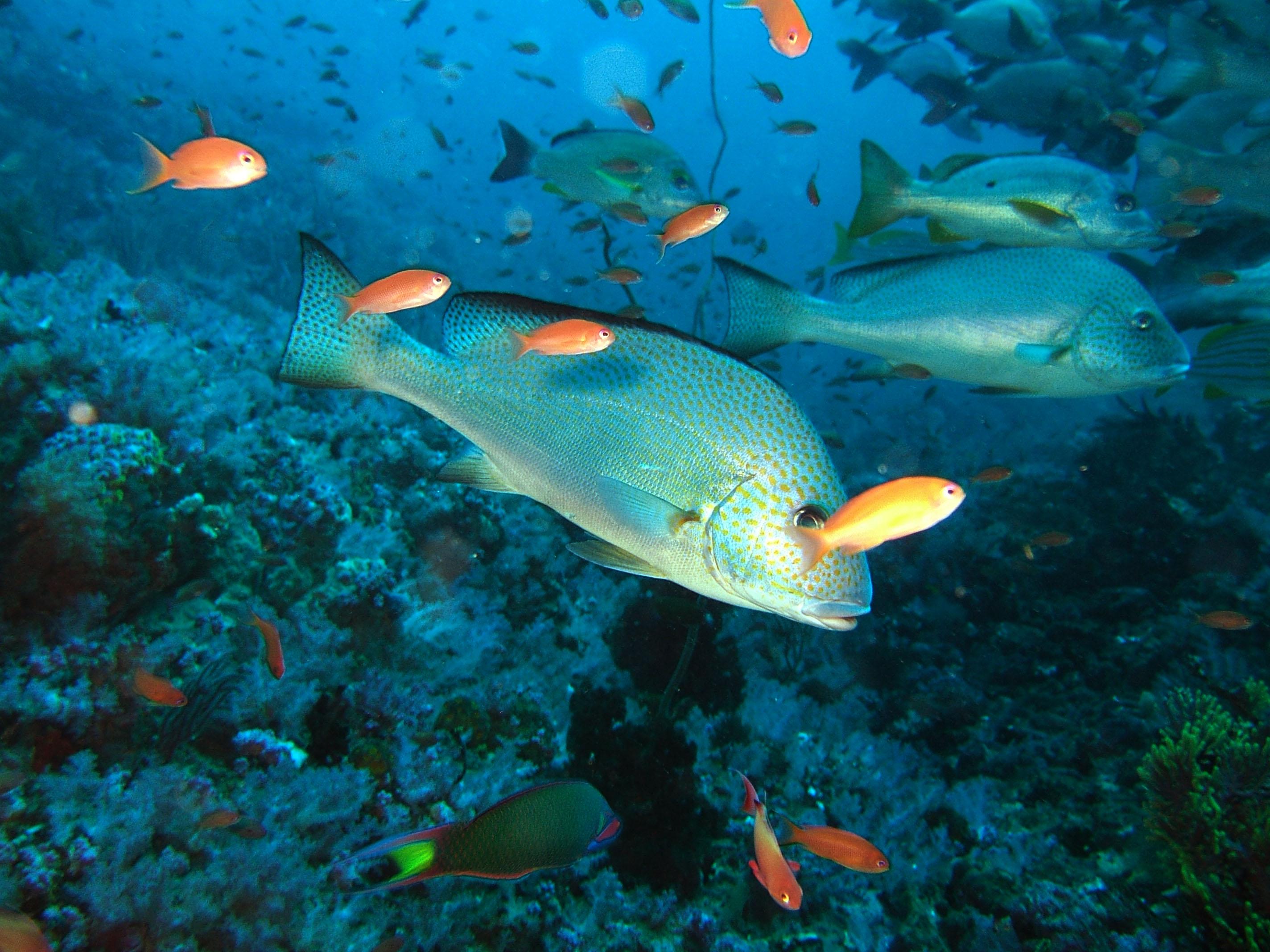 Dive 17 Philippines Mindoro Sabang Fish Bowl Oct 2005 22