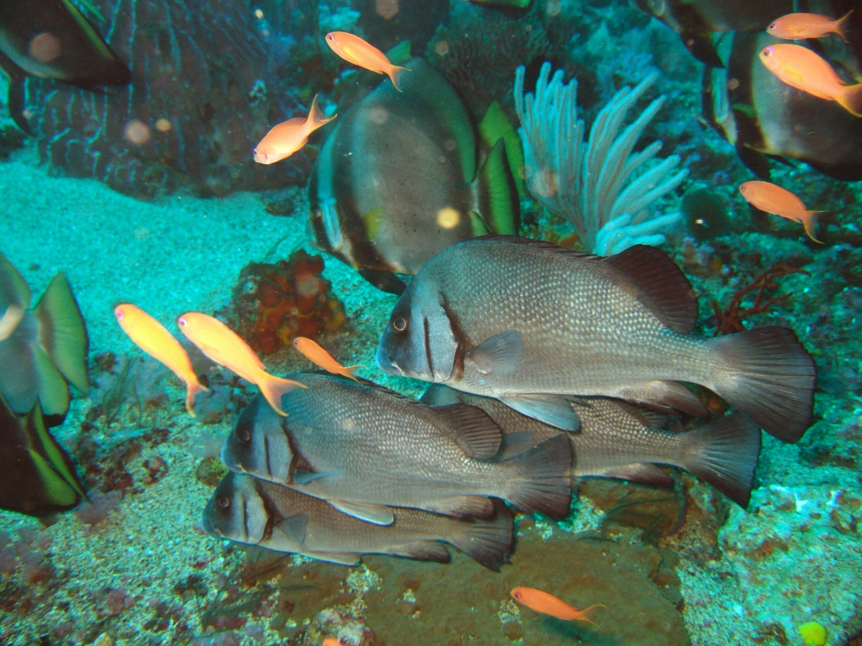 Dive 17 Philippines Mindoro Sabang Fish Bowl Oct 2005 24