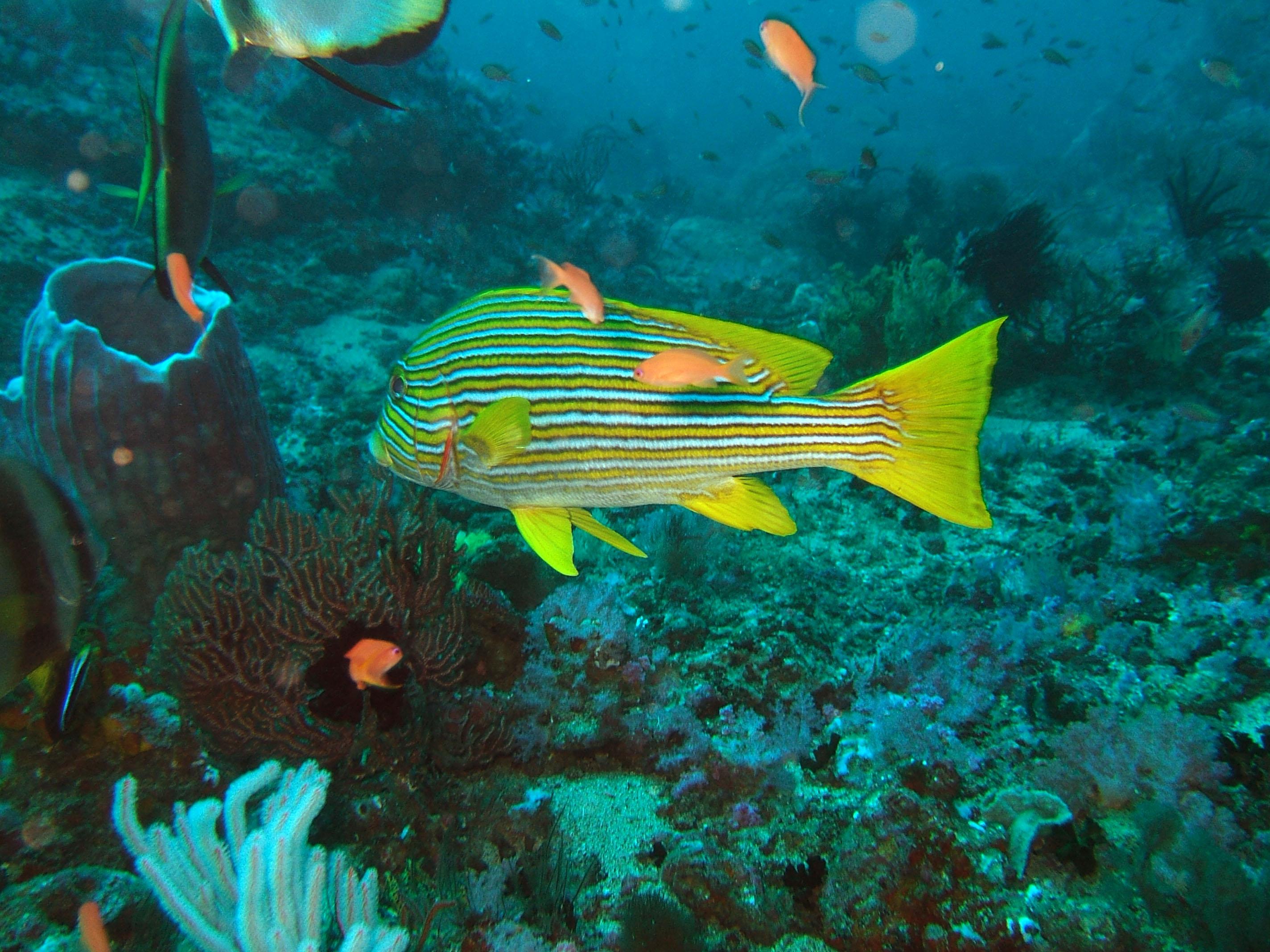 Dive 17 Philippines Mindoro Sabang Fish Bowl Oct 2005 25
