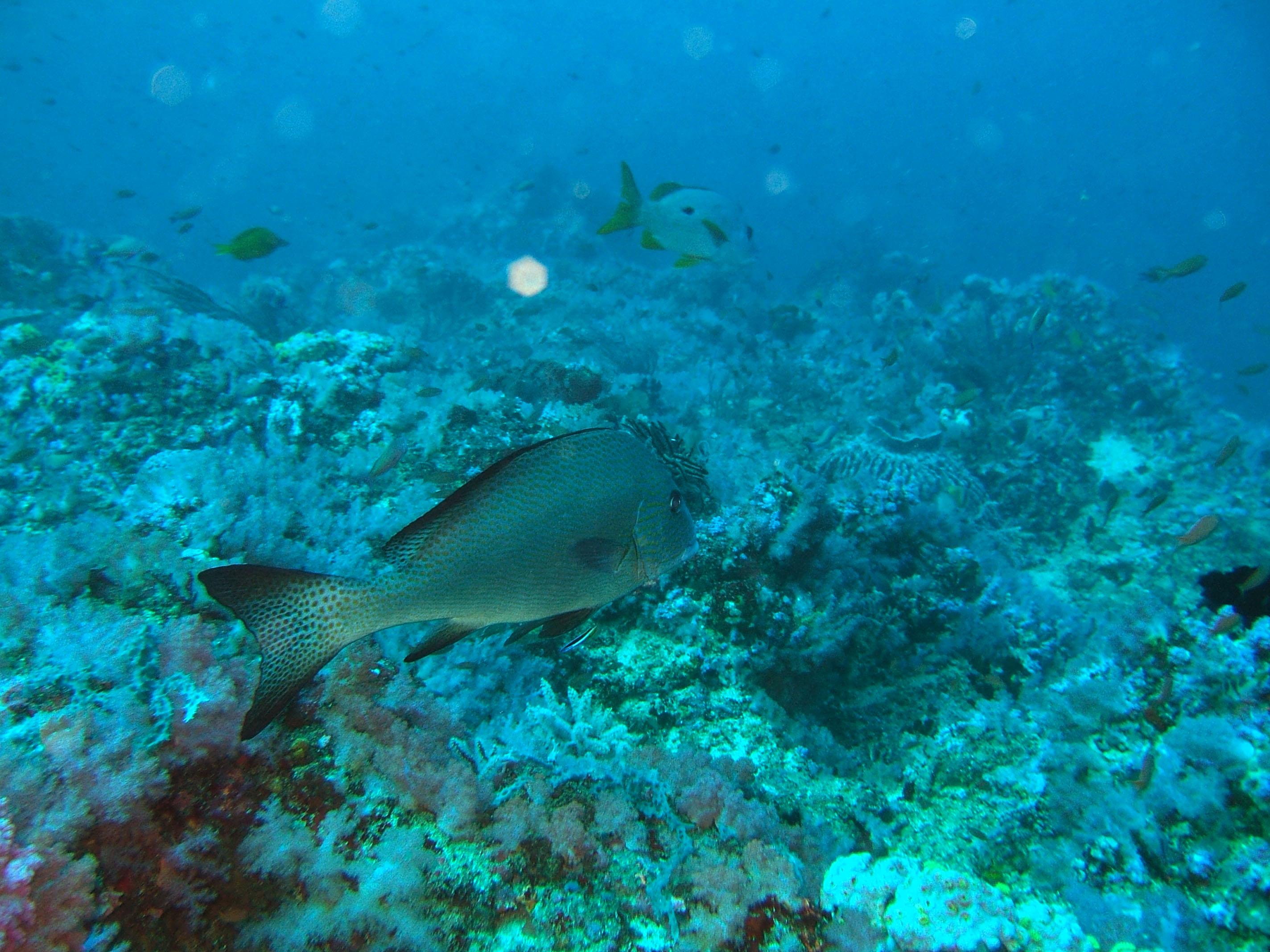 Dive 17 Philippines Mindoro Sabang Fish Bowl Oct 2005 28