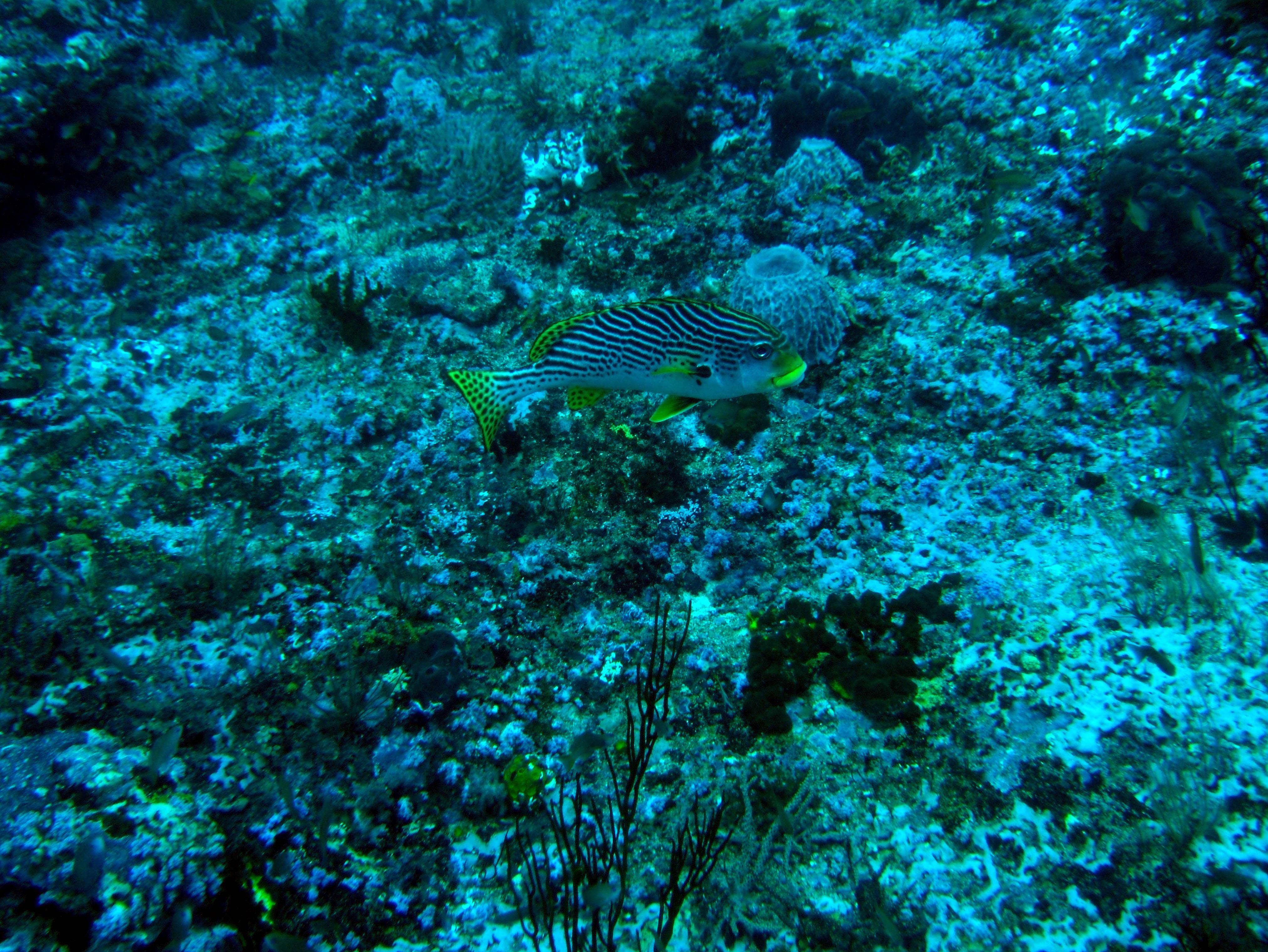 Dive 18 Philippines Mindoro Sabang Canyons July 2005 02