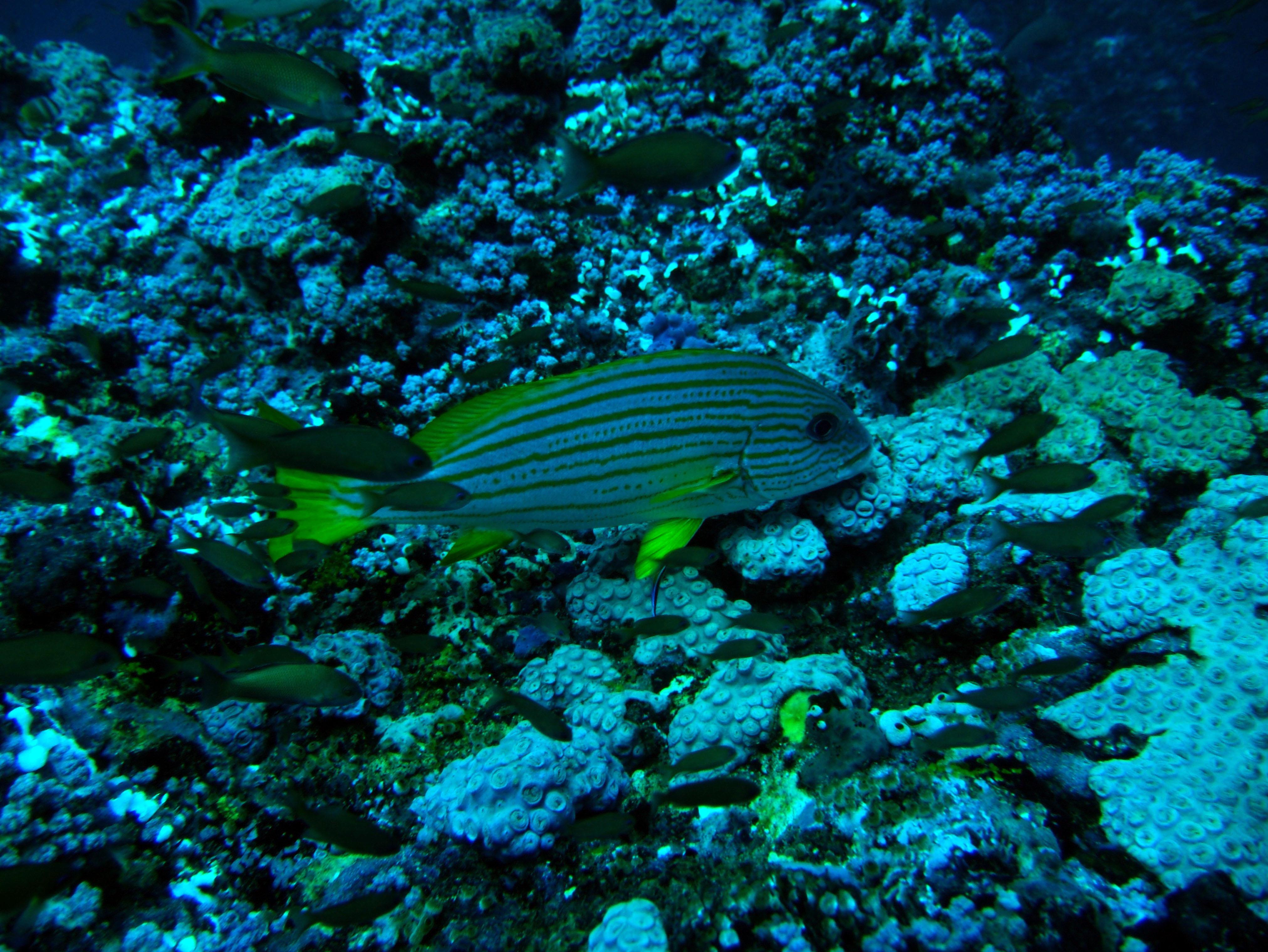 Dive 18 Philippines Mindoro Sabang Canyons July 2005 03