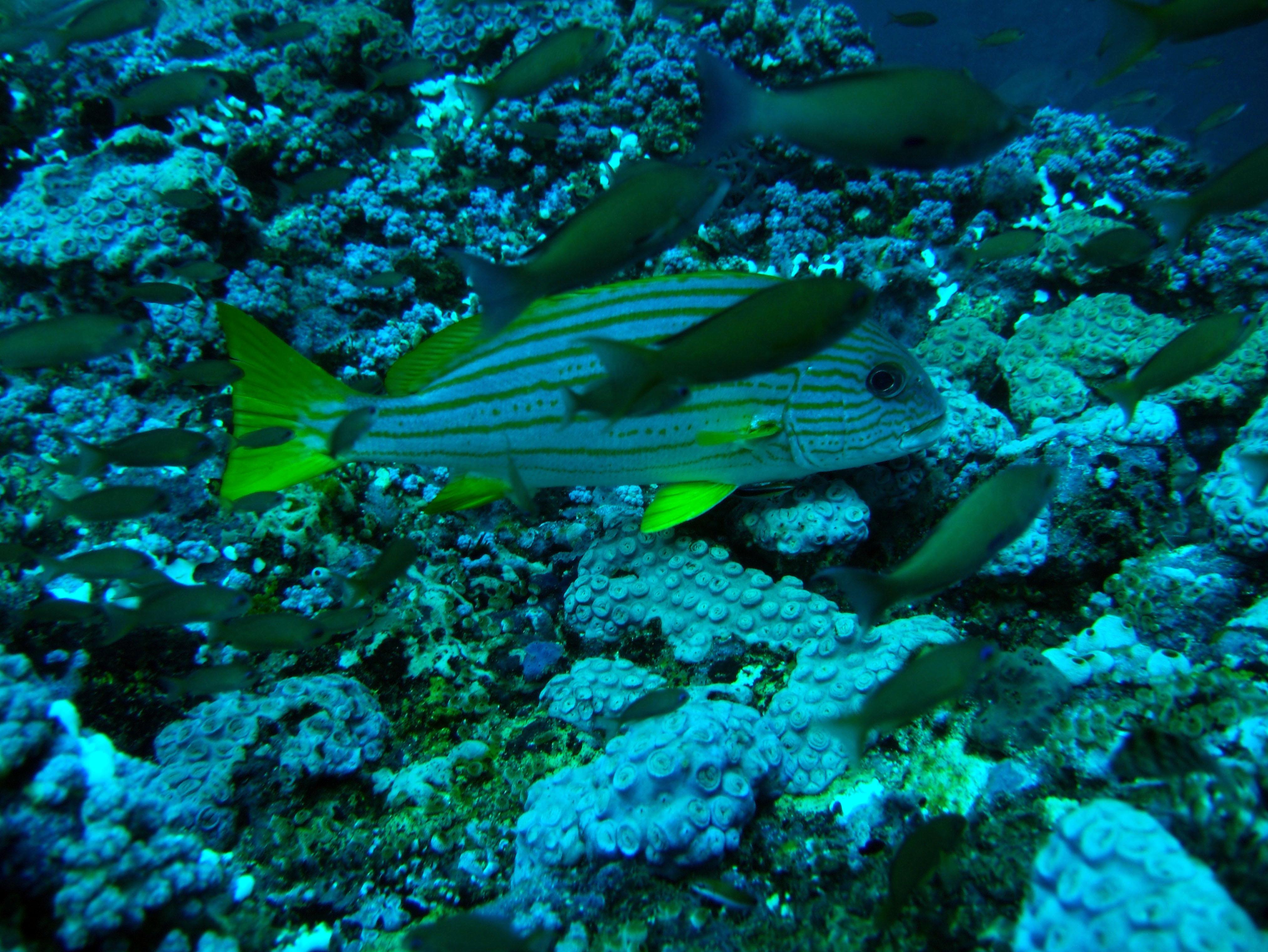 Dive 18 Philippines Mindoro Sabang Canyons July 2005 04