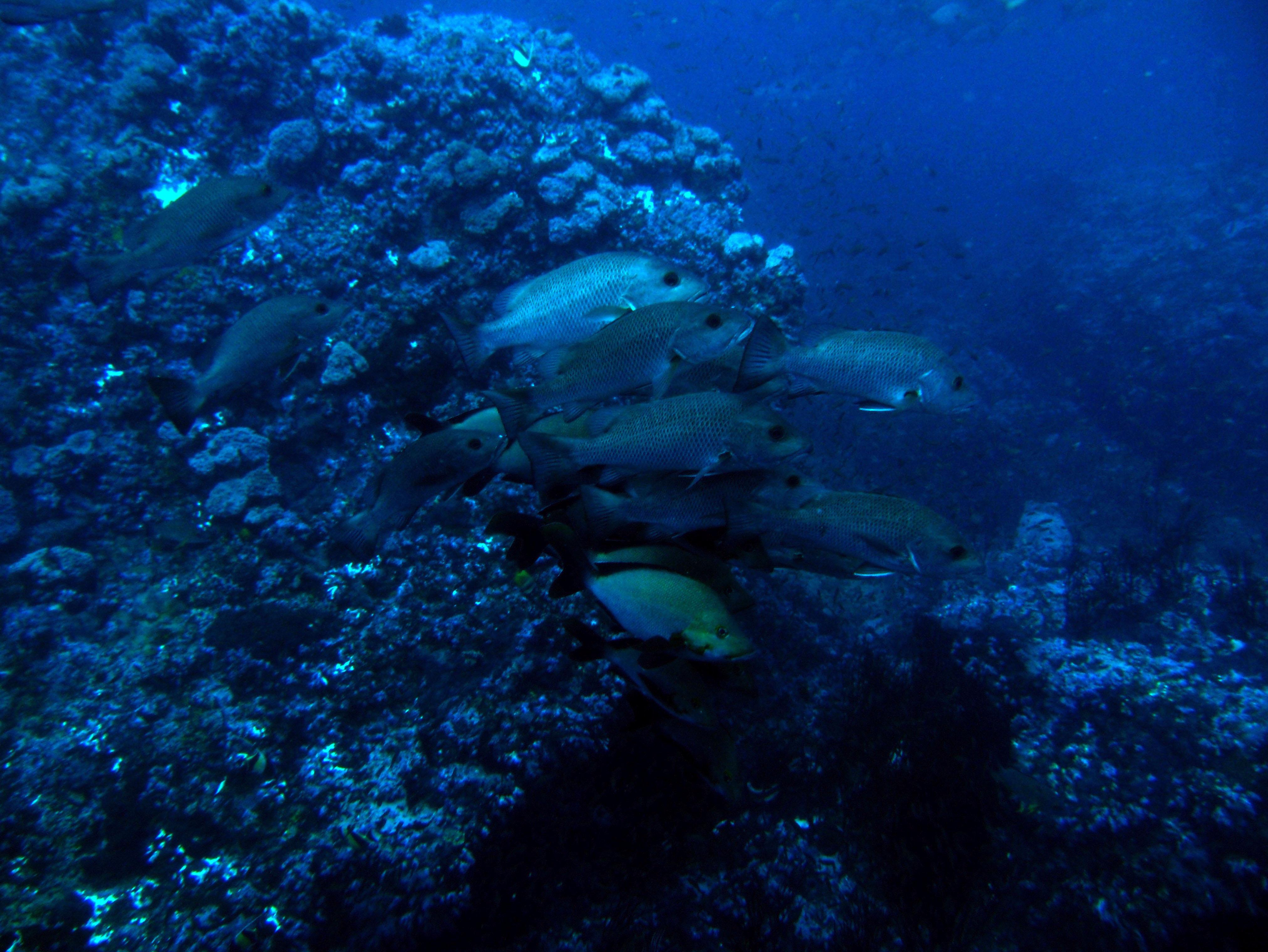 Dive 18 Philippines Mindoro Sabang Canyons July 2005 07