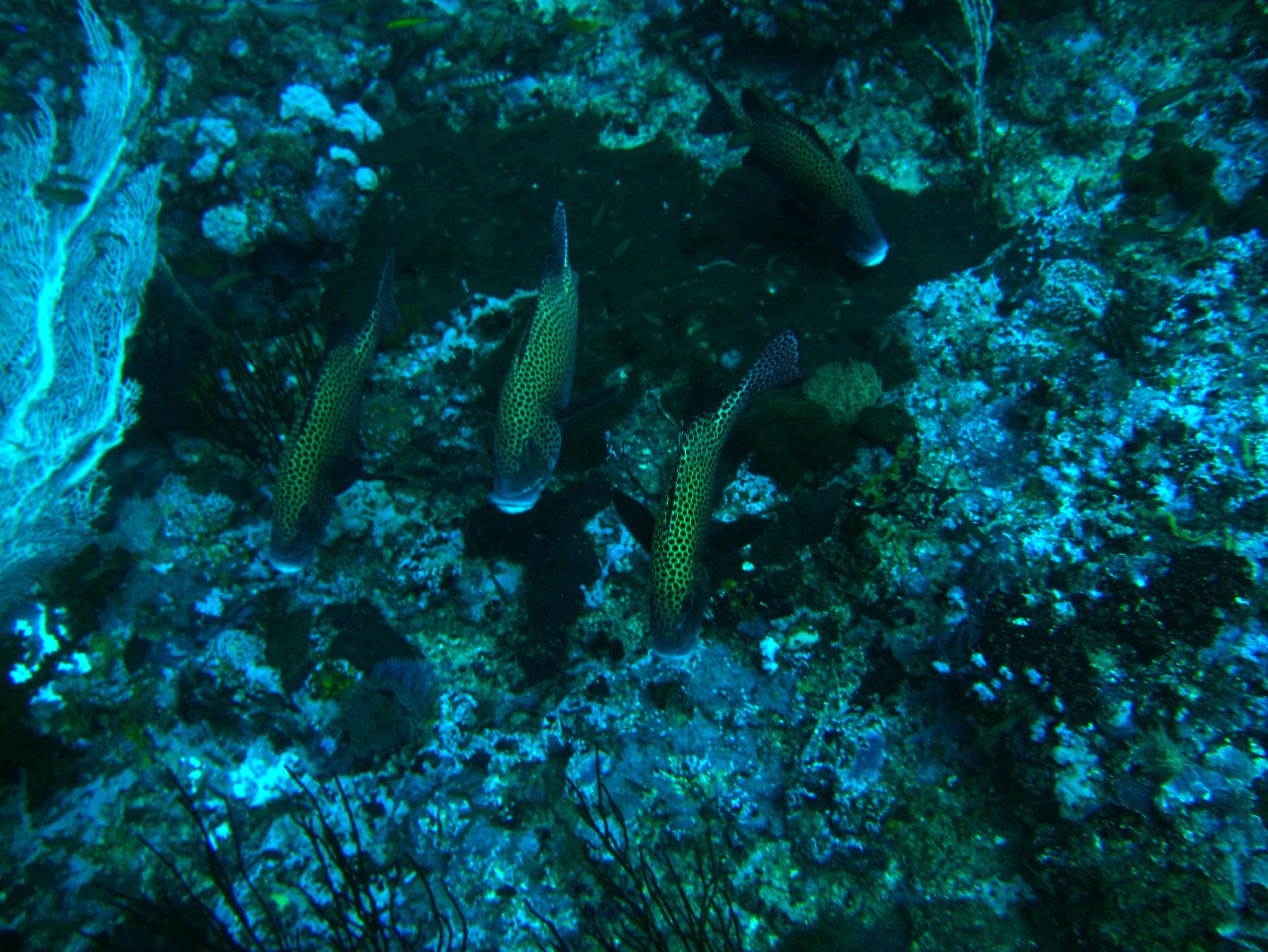 Dive 18 Philippines Mindoro Sabang Canyons July 2005 08