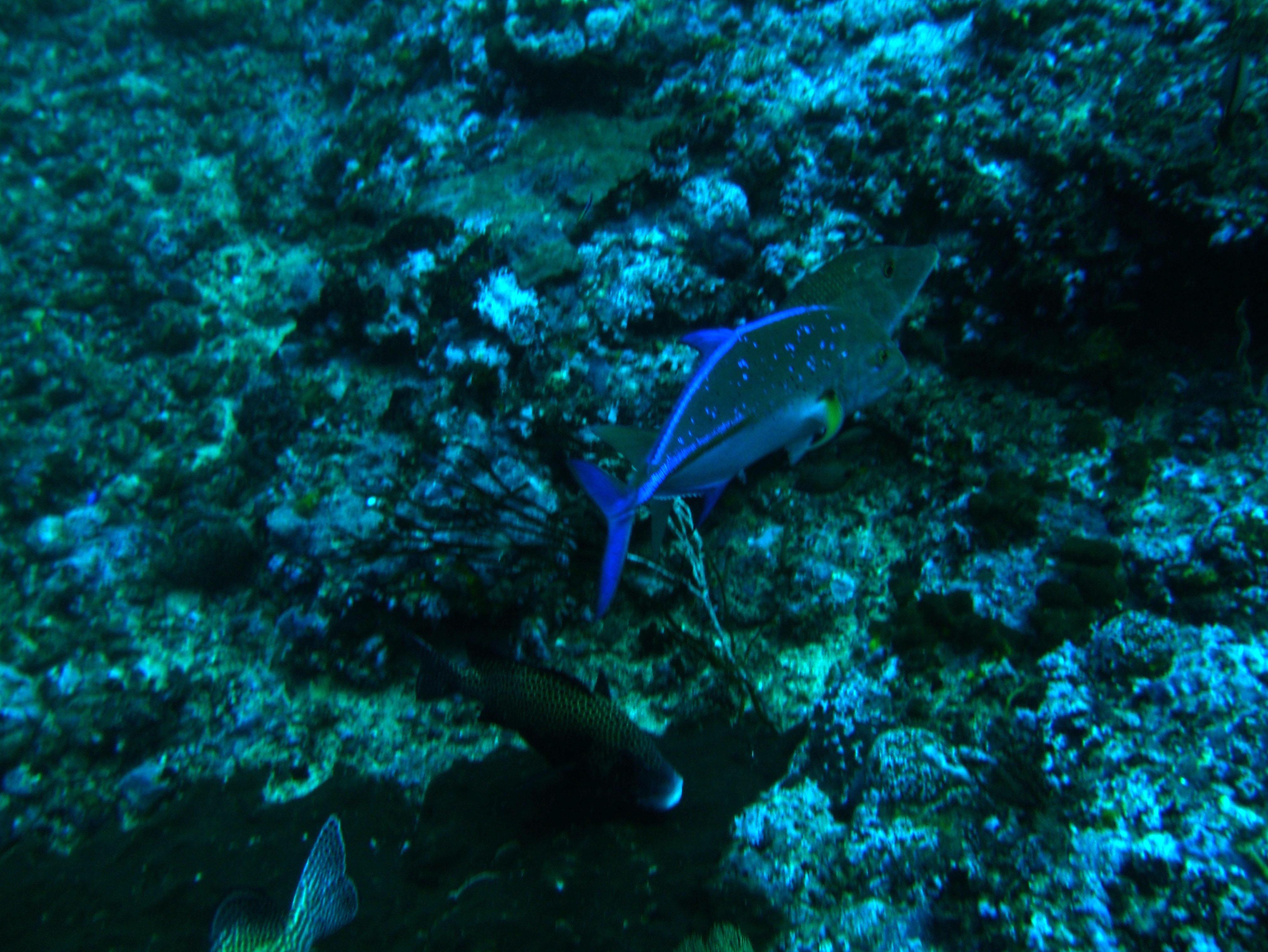 Dive 18 Philippines Mindoro Sabang Canyons July 2005 09
