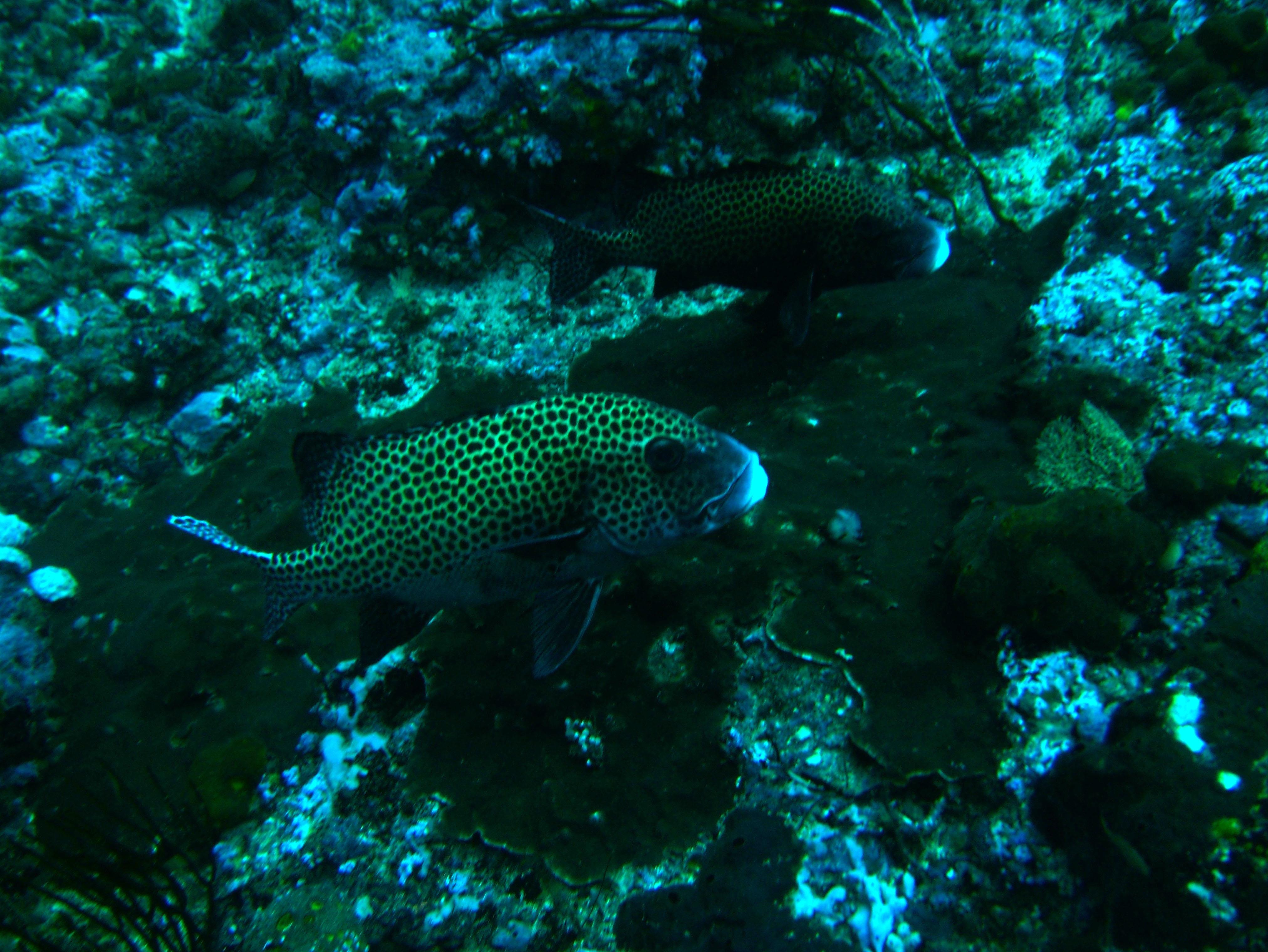 Dive 18 Philippines Mindoro Sabang Canyons July 2005 10