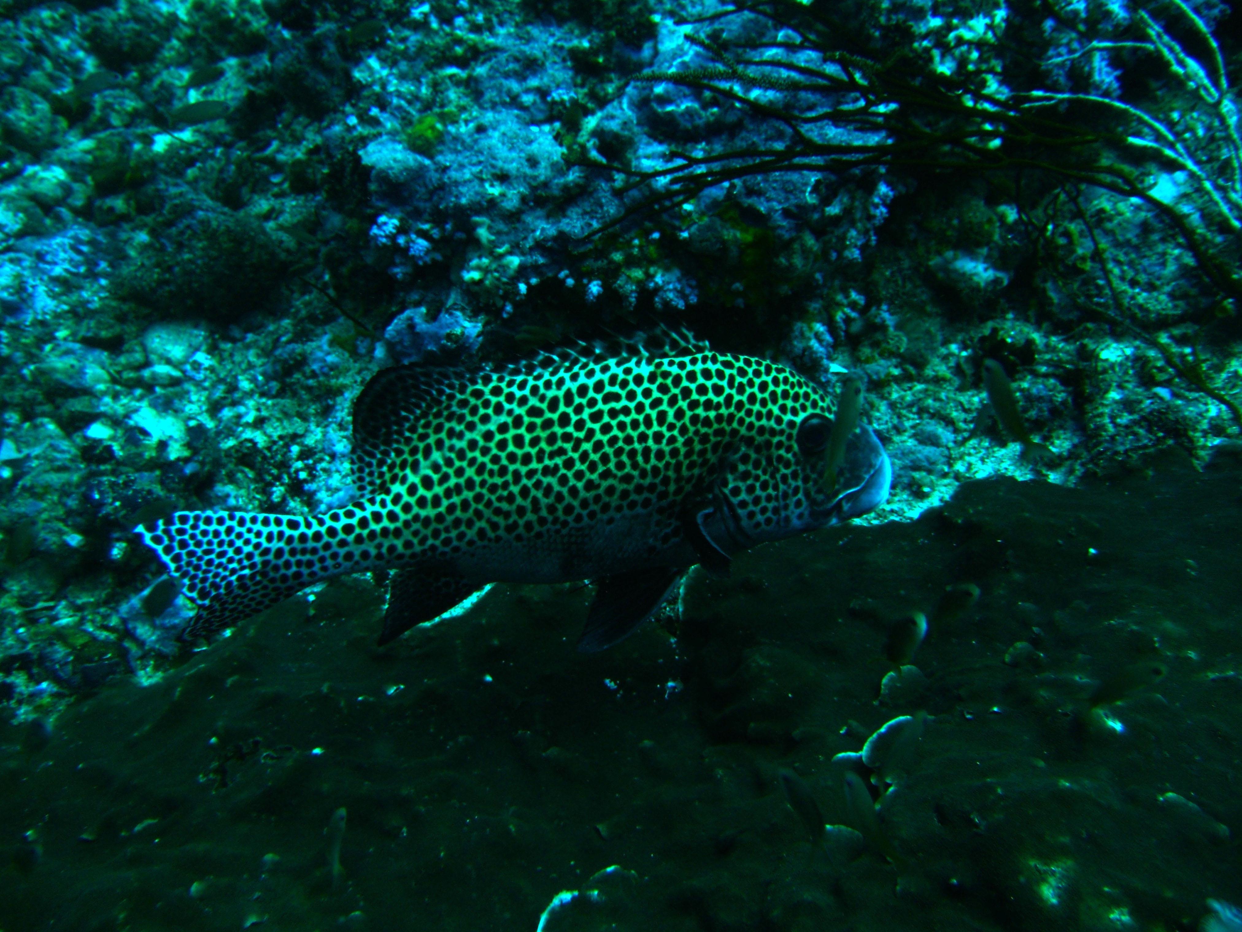 Dive 18 Philippines Mindoro Sabang Canyons July 2005 11