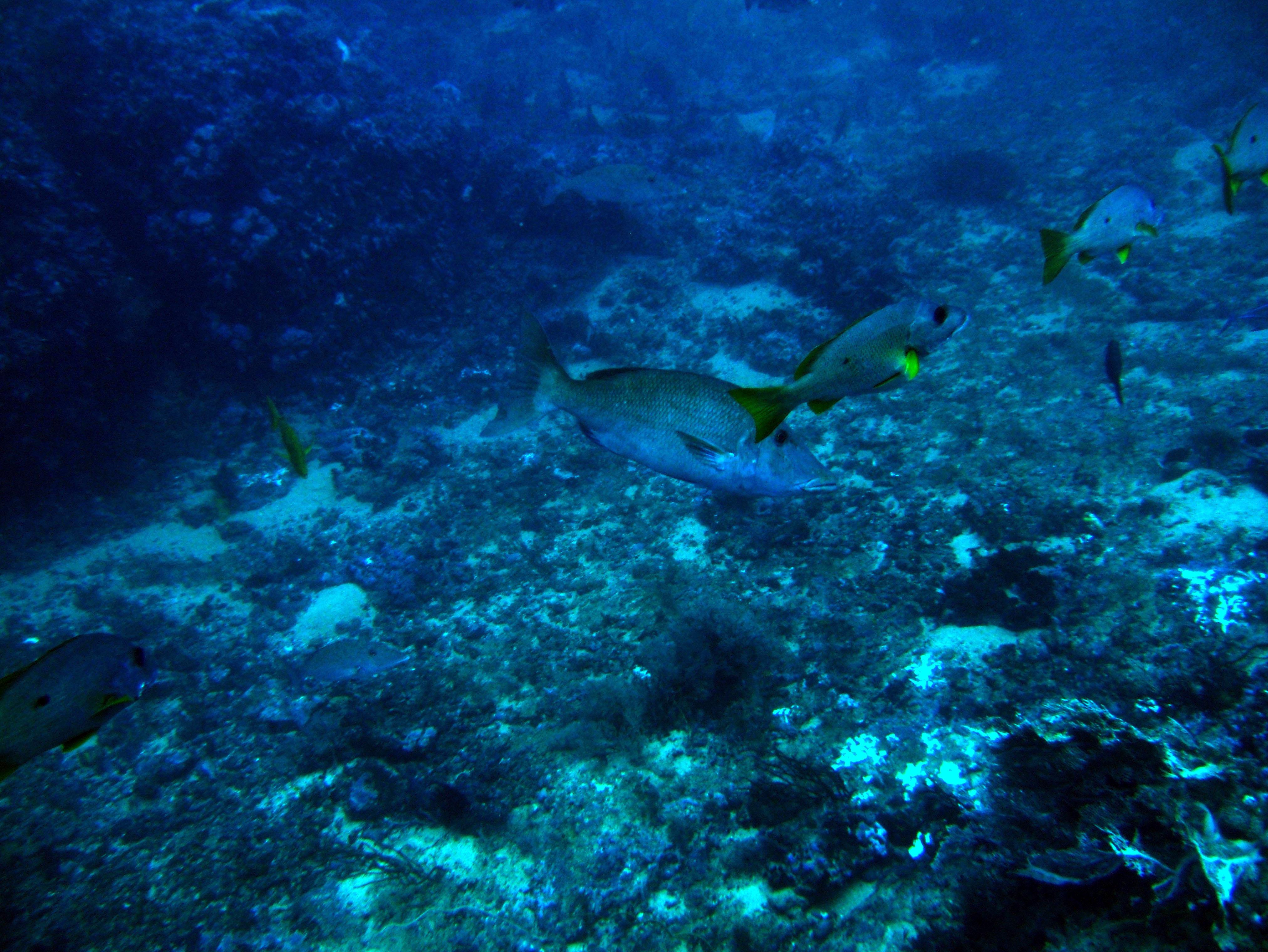 Dive 18 Philippines Mindoro Sabang Canyons July 2005 14