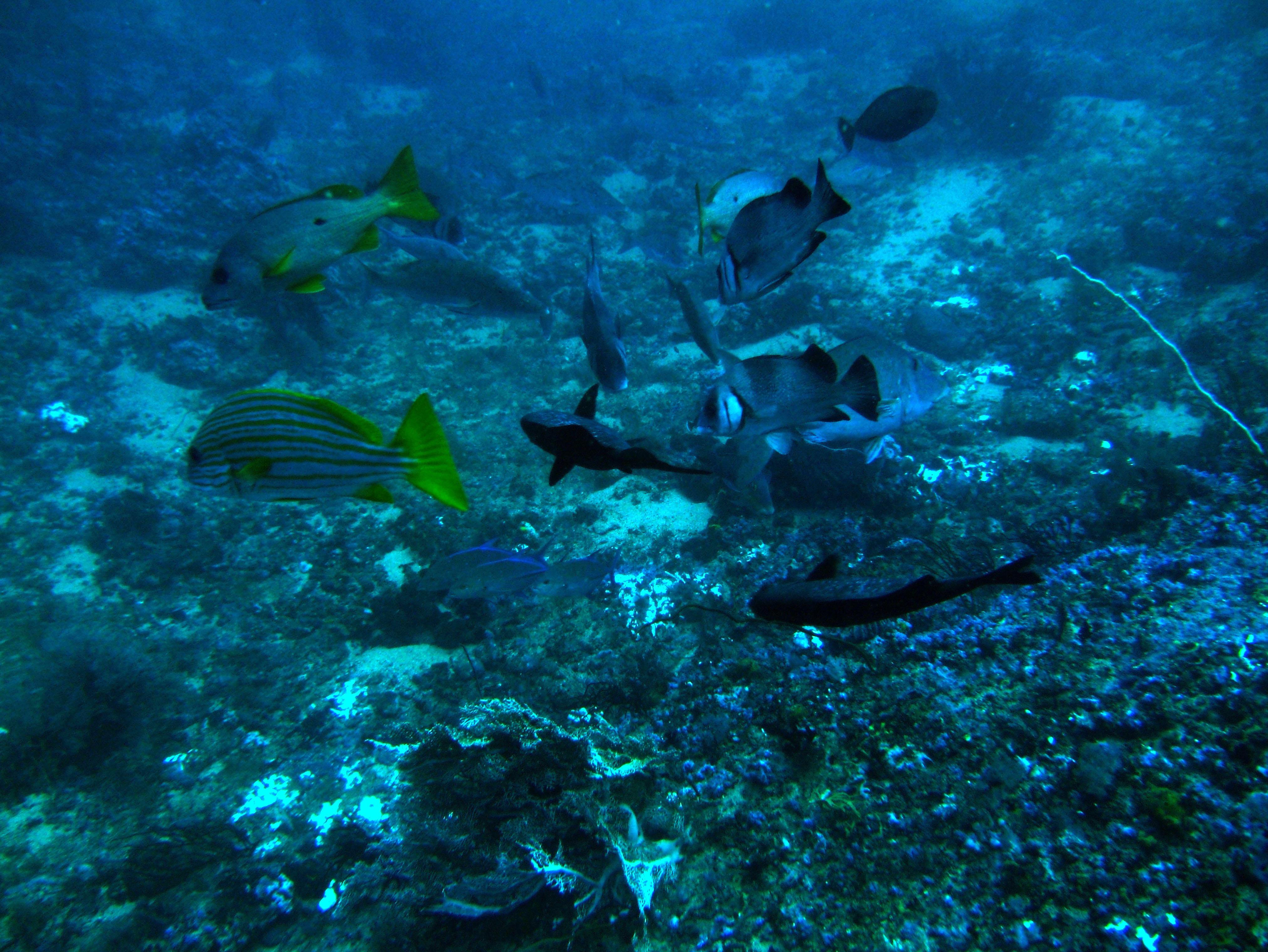 Dive 18 Philippines Mindoro Sabang Canyons July 2005 15