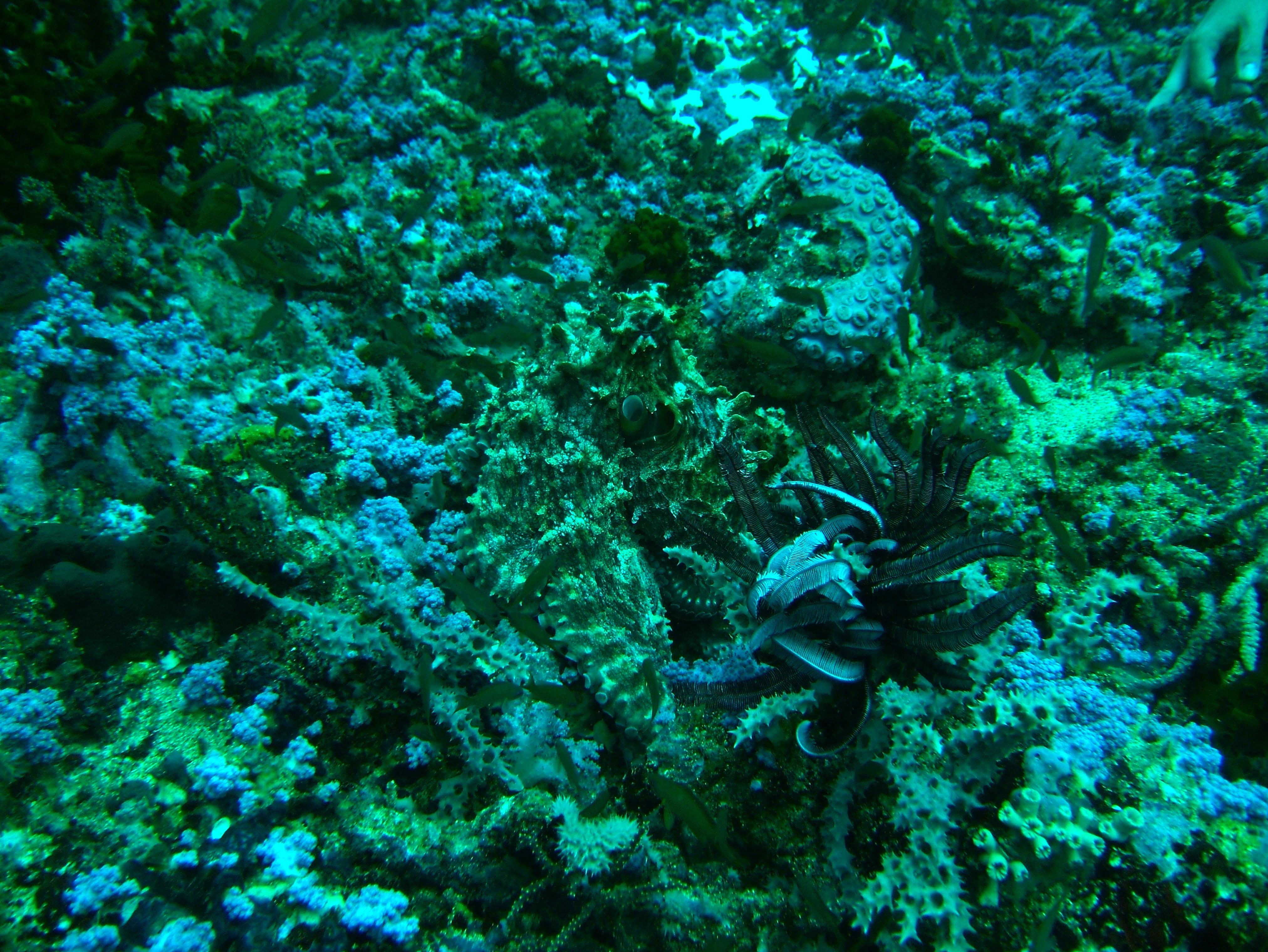 Dive 18 Philippines Mindoro Sabang Canyons July 2005 16