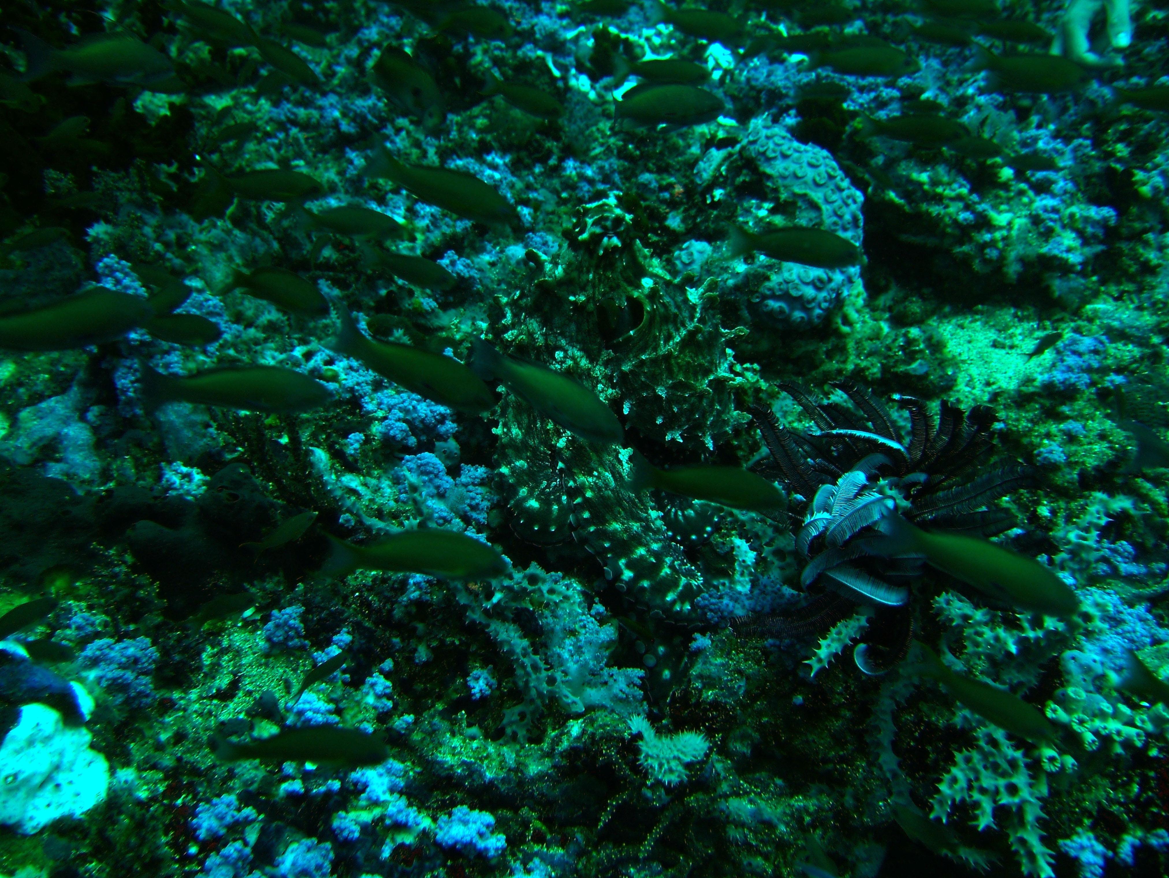 Dive 18 Philippines Mindoro Sabang Canyons July 2005 17