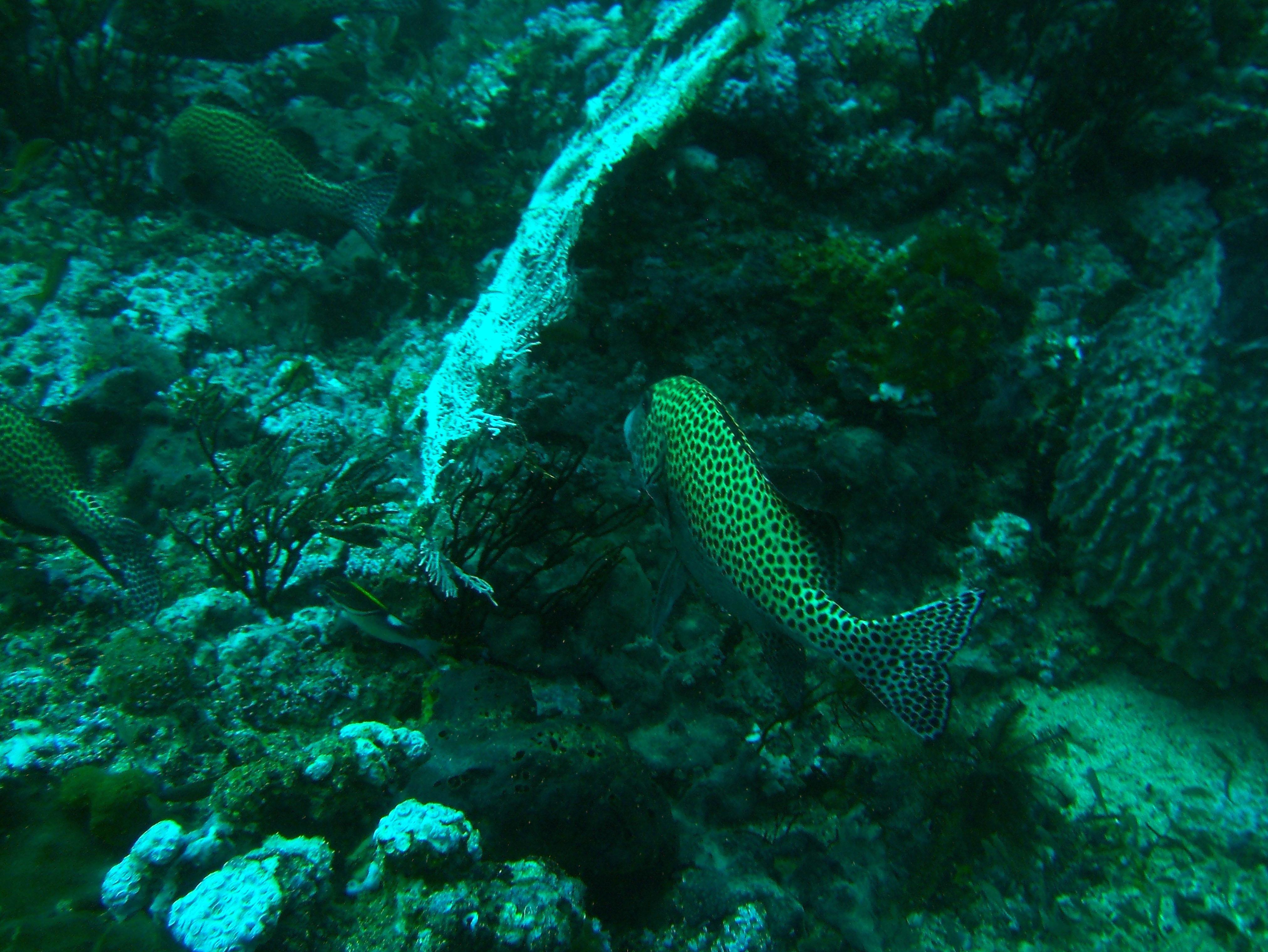 Dive 18 Philippines Mindoro Sabang Canyons July 2005 19