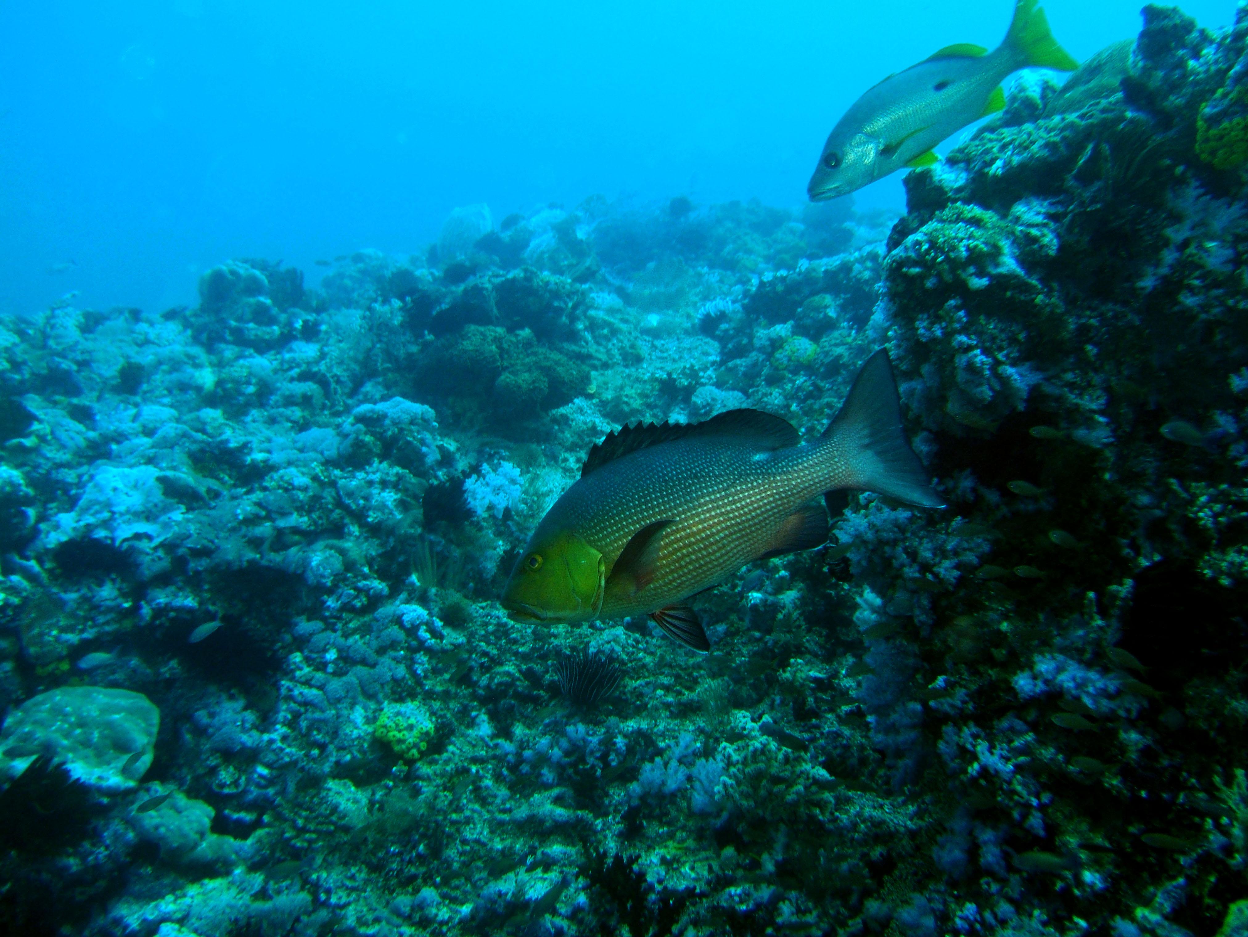 Dive 18 Philippines Mindoro Sabang Canyons Nov 2005 01