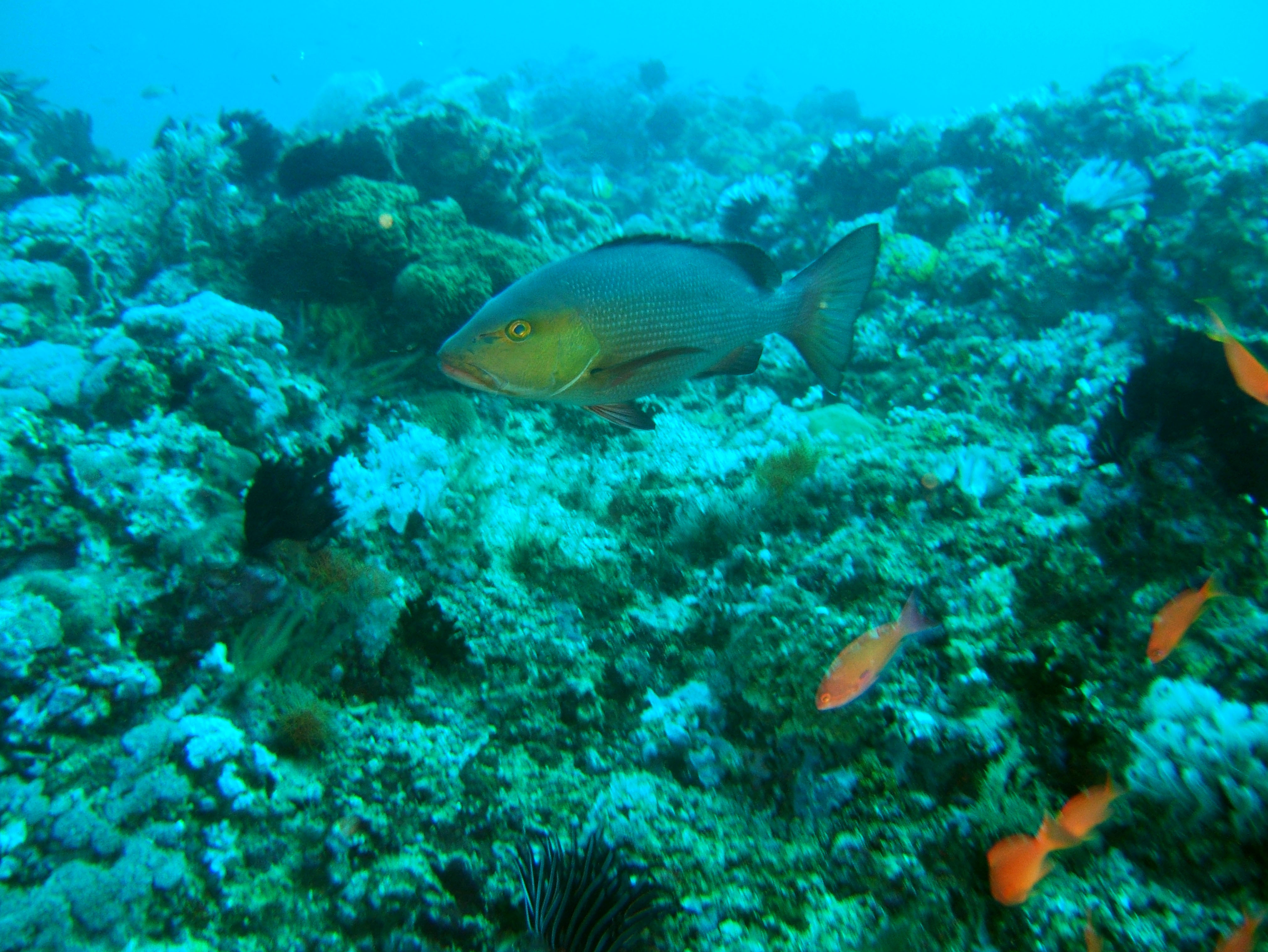 Dive 18 Philippines Mindoro Sabang Canyons Nov 2005 02